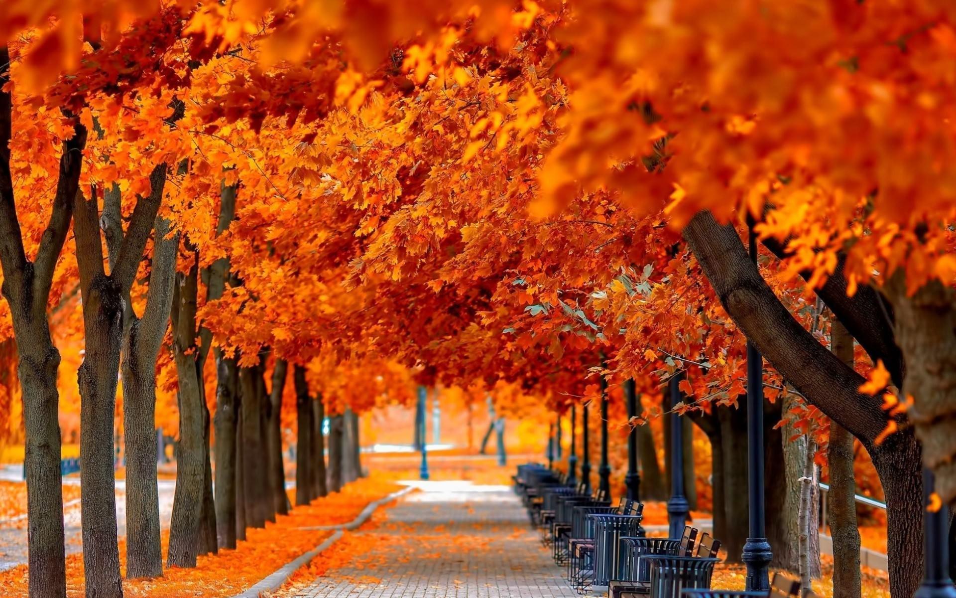 Fall Leaves Desktop Background ·① Download Free Stunning