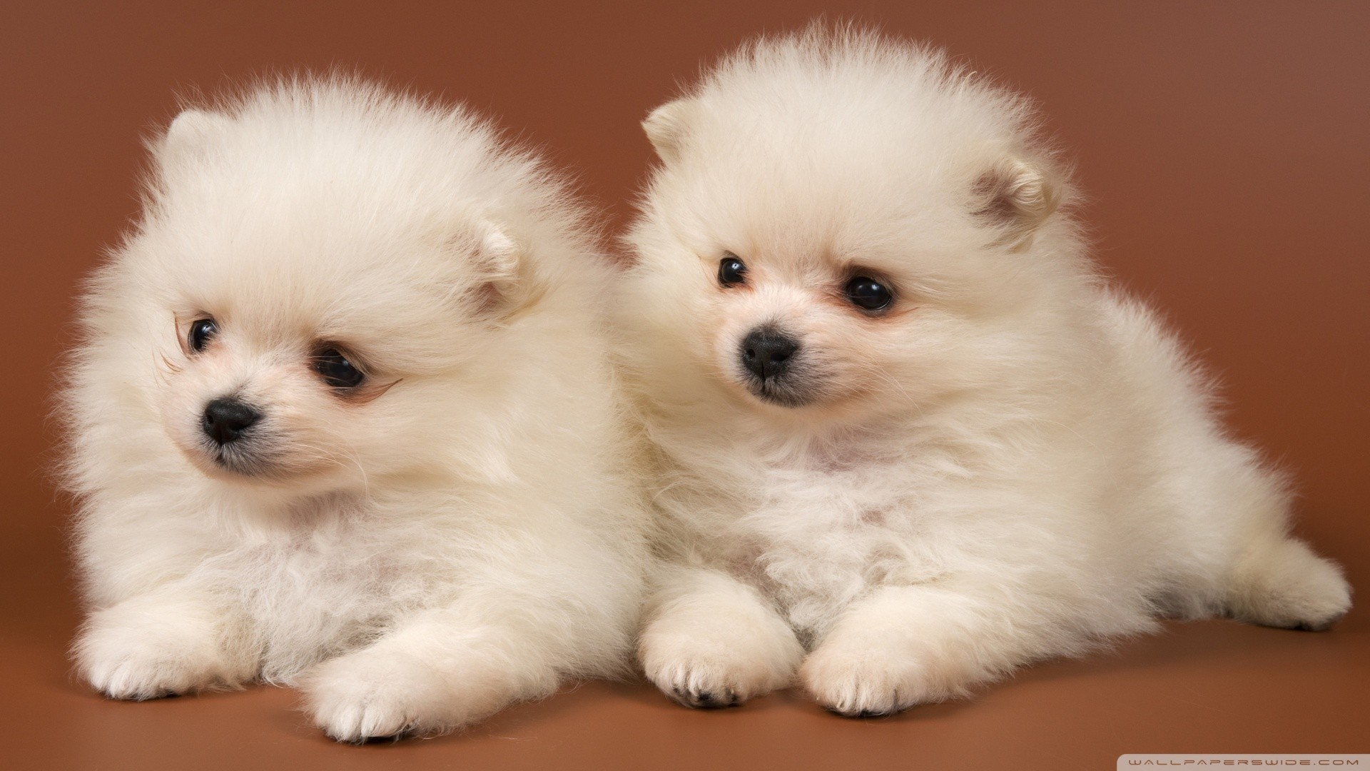 puppies wallpaper ·① download free beautiful backgrounds for