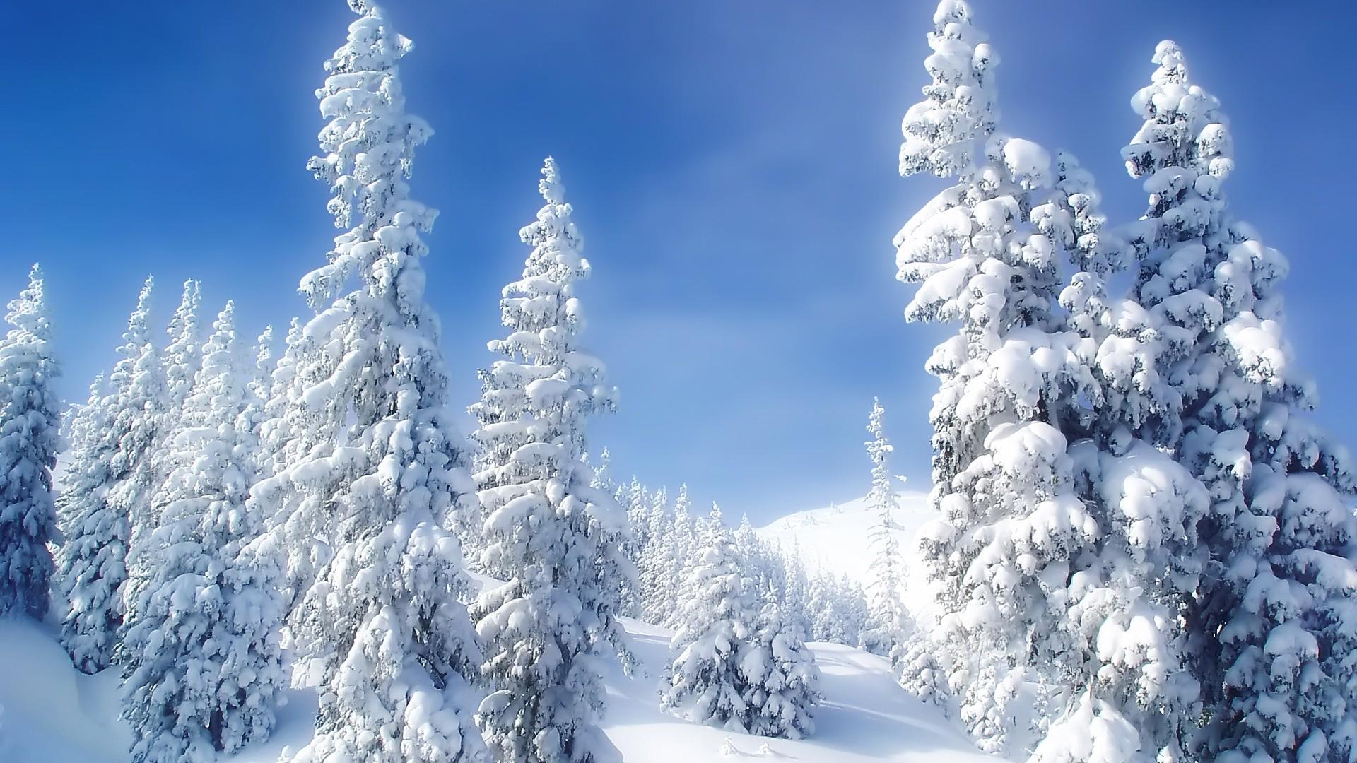 Winter Wonderland Desktop Background ·① WallpaperTag