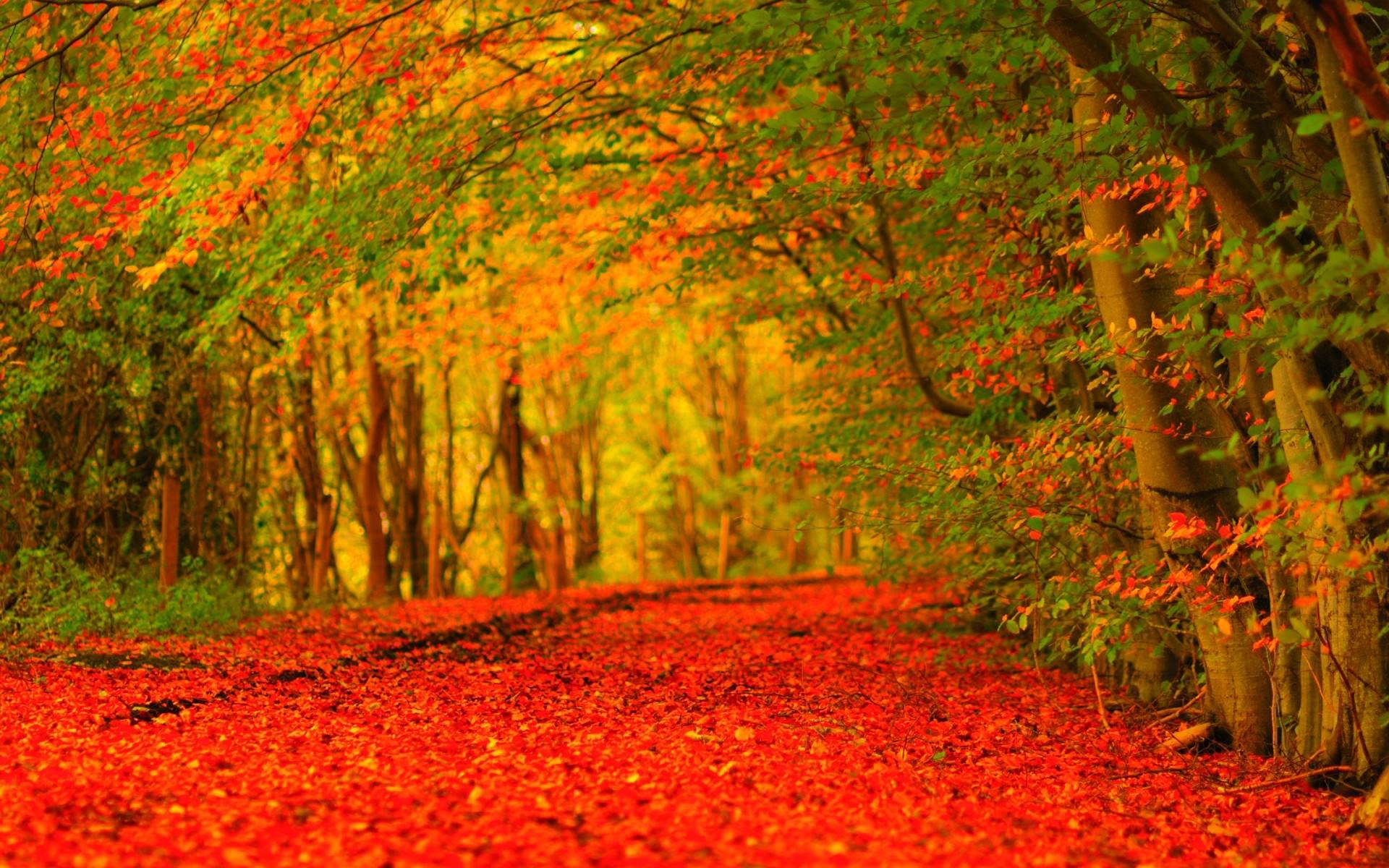 Autumn wallpaper Widescreen ·① Download free amazing High ...