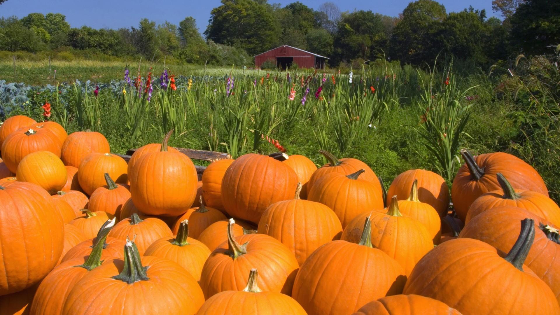 Fall Harvest wallpaper ·① Download free amazing HD ...