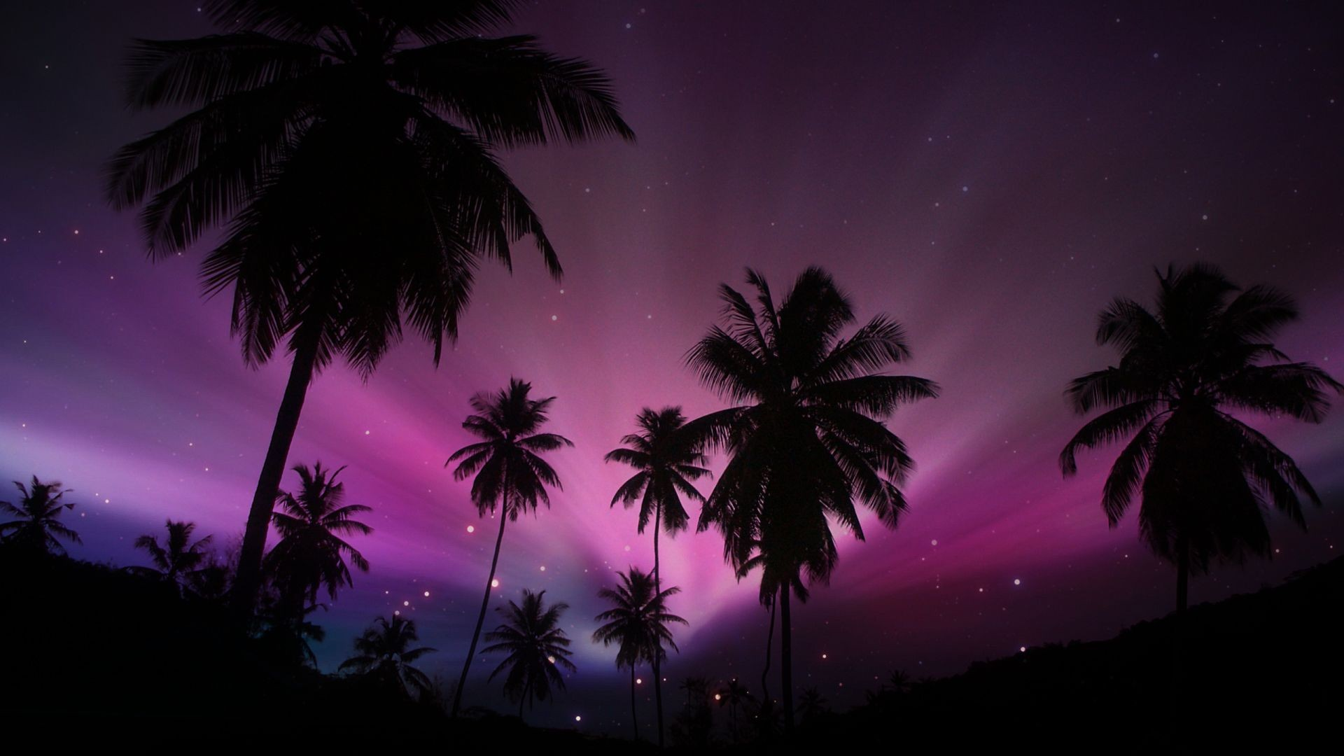 Palm Tree Wallpaper ·① Download Free HD Wallpapers For