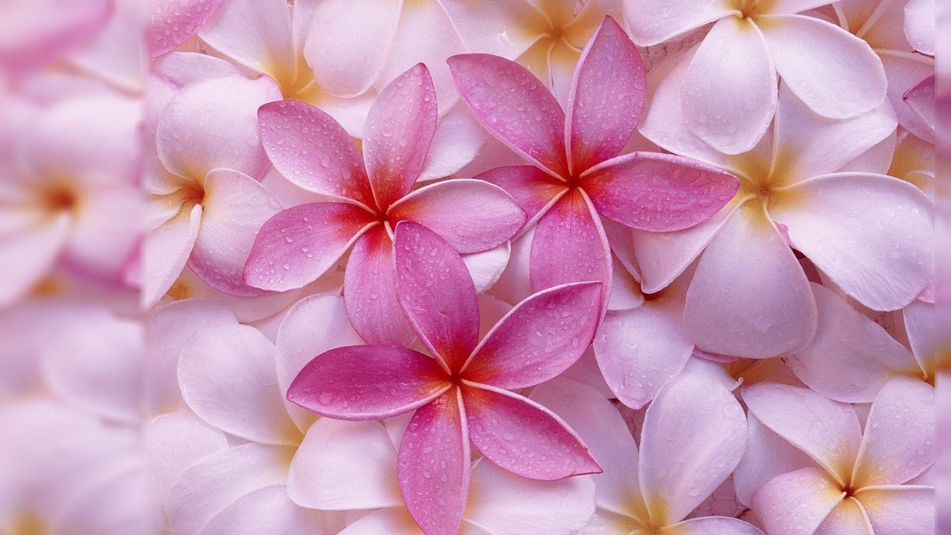 Flowers Images Desktop Backgrounds