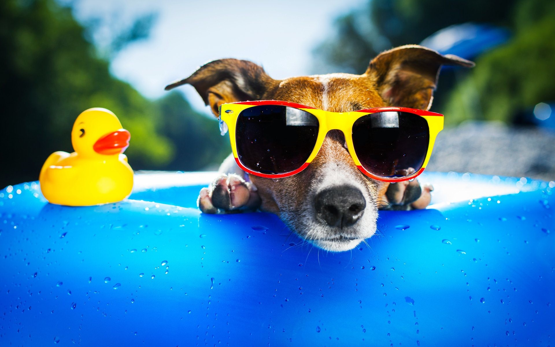 cool dog backgrounds 183��