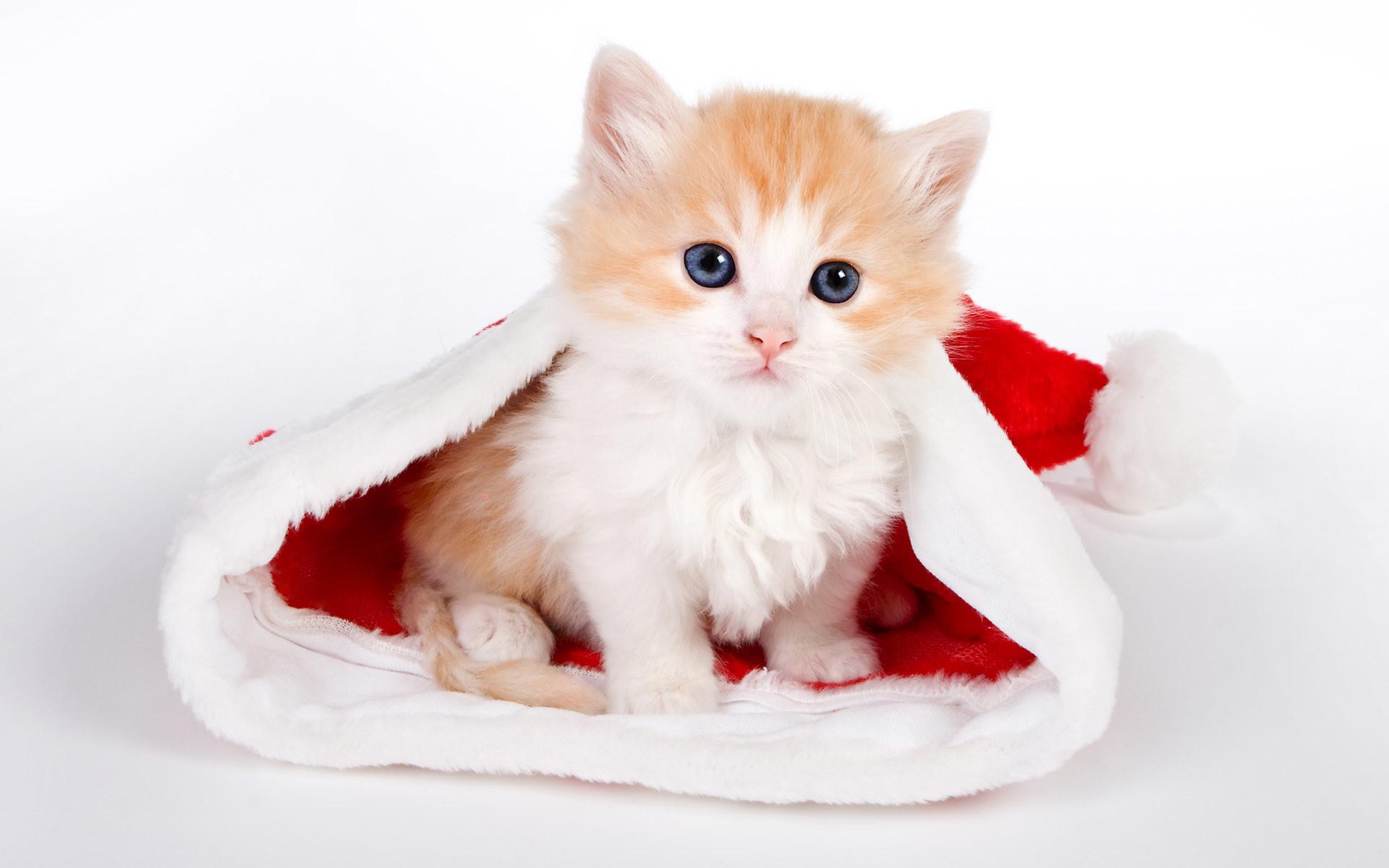 Cute Cats Wallpaper 1