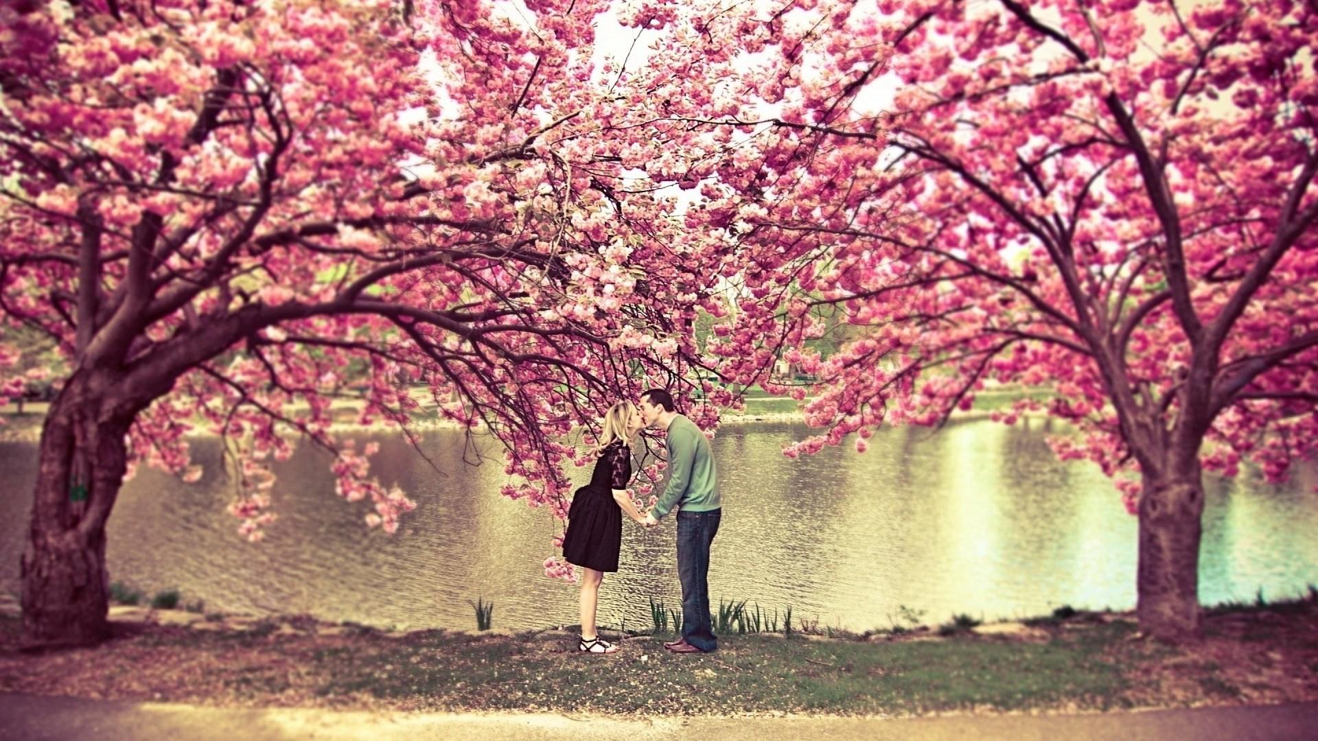 cherry blossom background. Black Bedroom Furniture Sets. Home Design Ideas