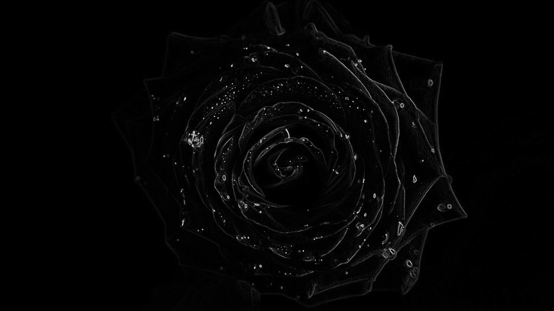 Black Roses Background ·① WallpaperTag