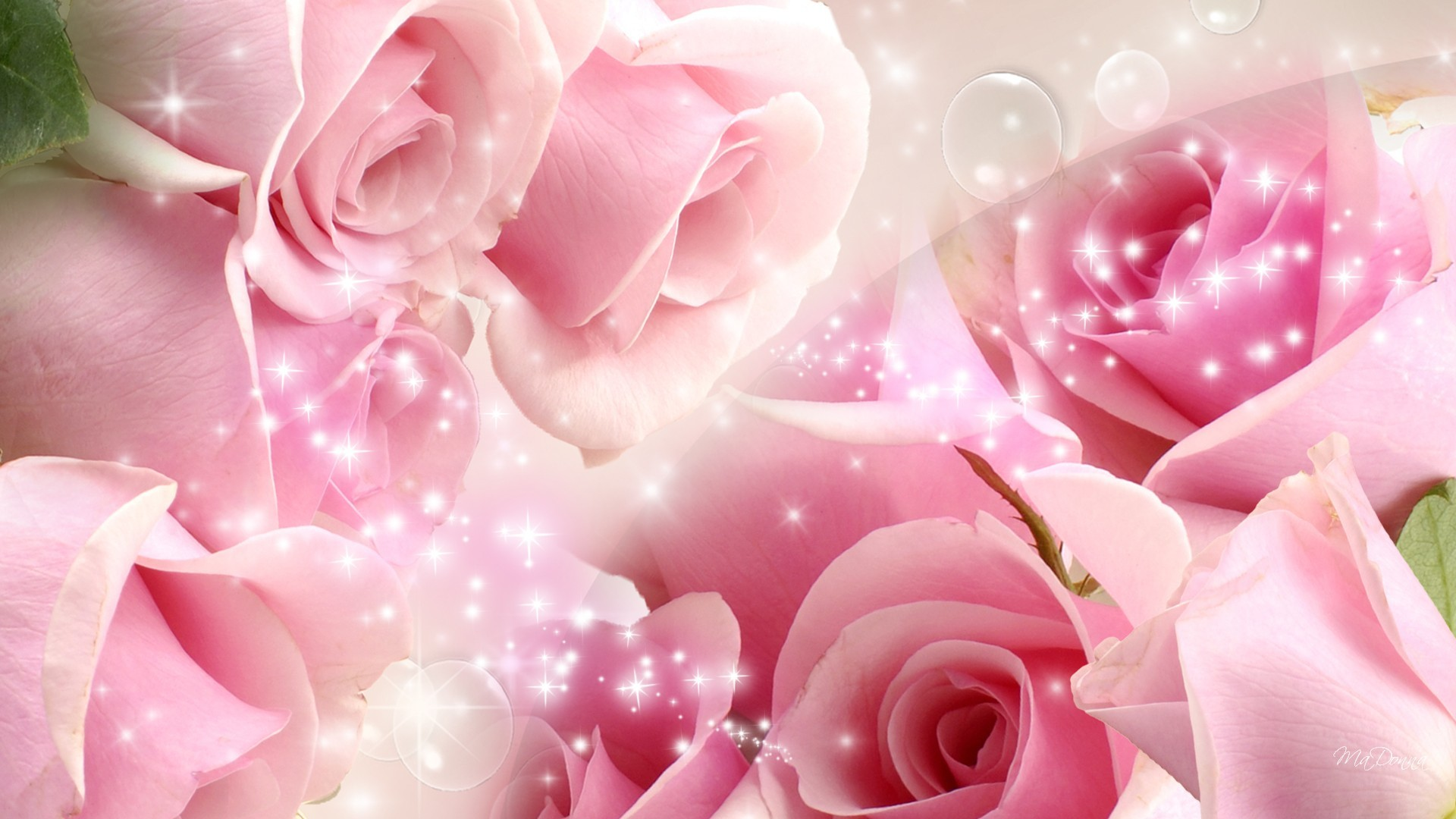 Pink And White Roses Background Roses Gallery