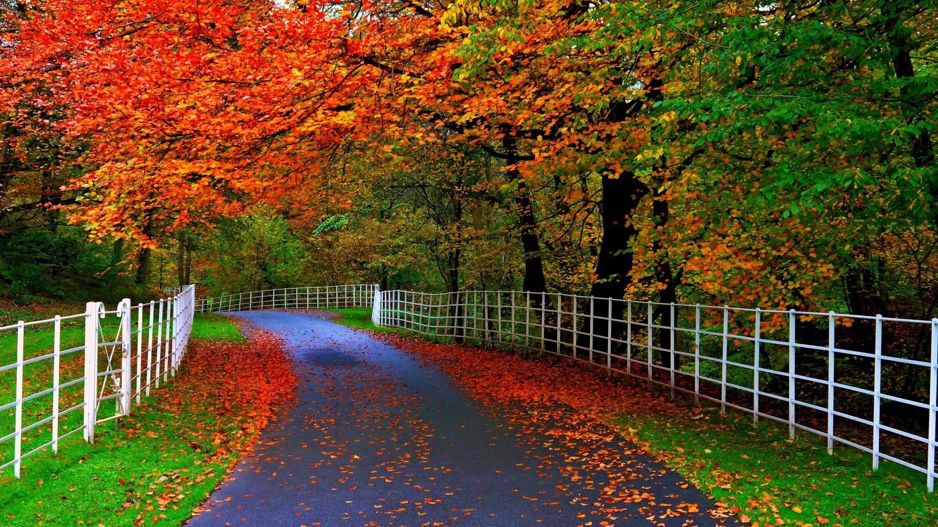 Beautiful Nature Wallpaper 1 Download Free Full HD Wallpapers For