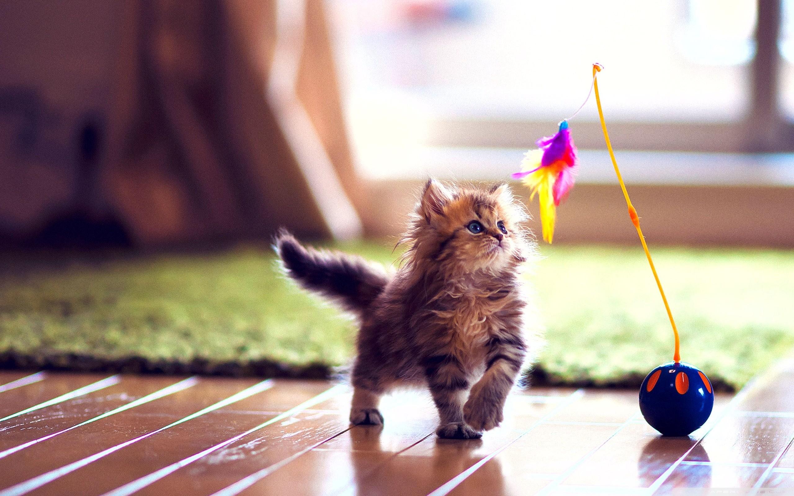 Cute Kitten Wallpapers ·â'