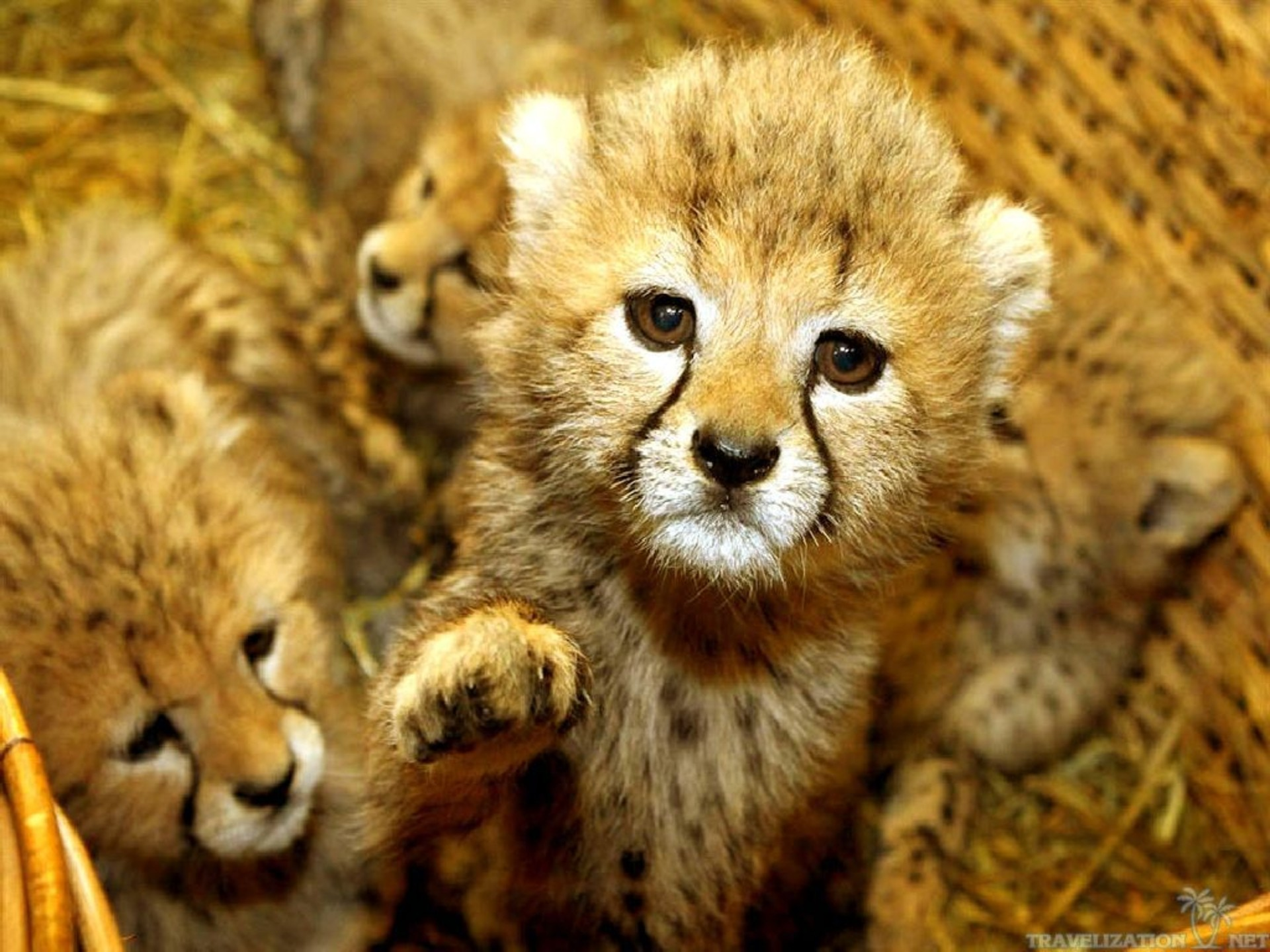 Cute Baby Animal Wallpaper ·①