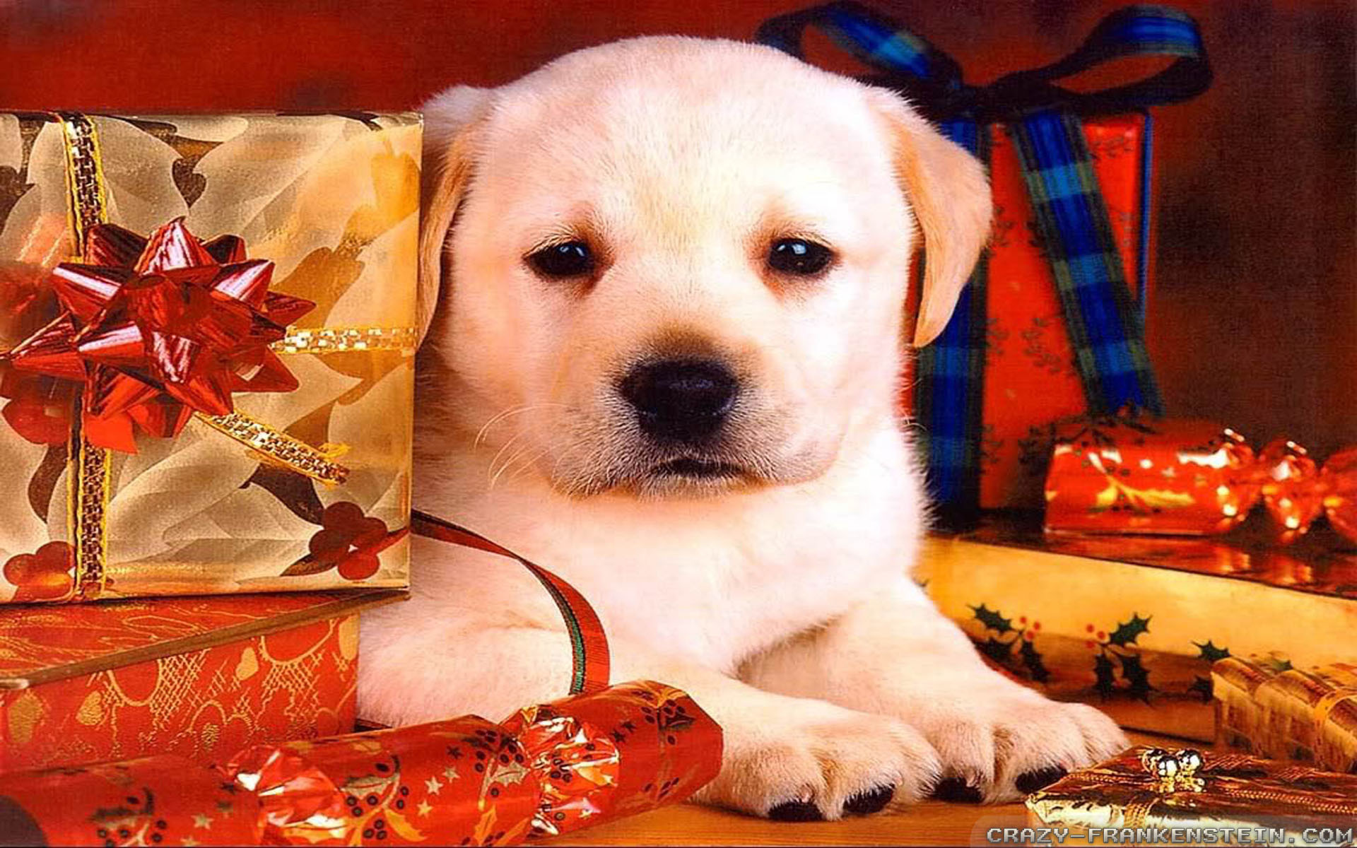 Puppy Christmas Wallpaper ·①