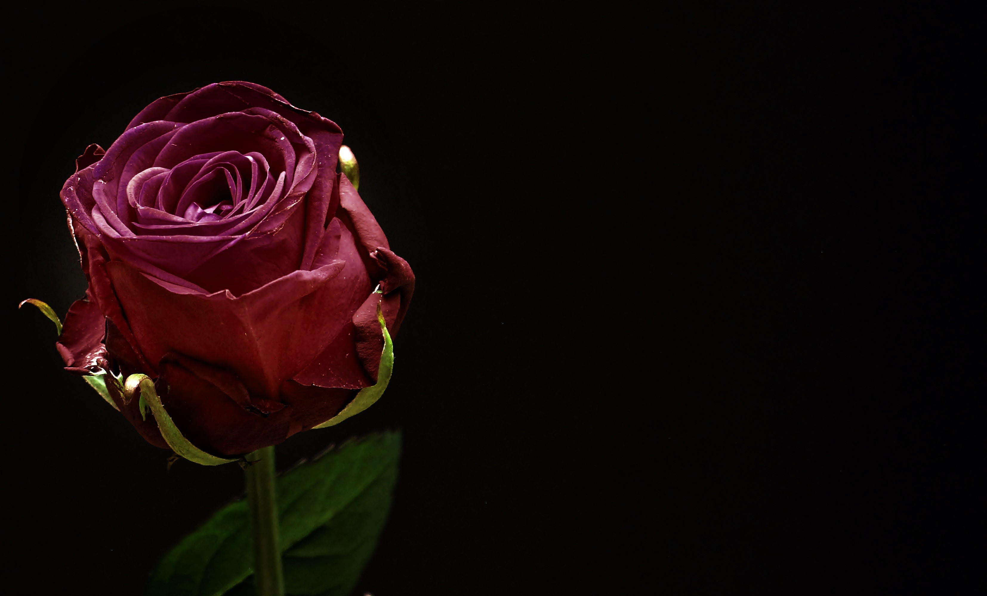 Red Roses On Black Background ·① WallpaperTag