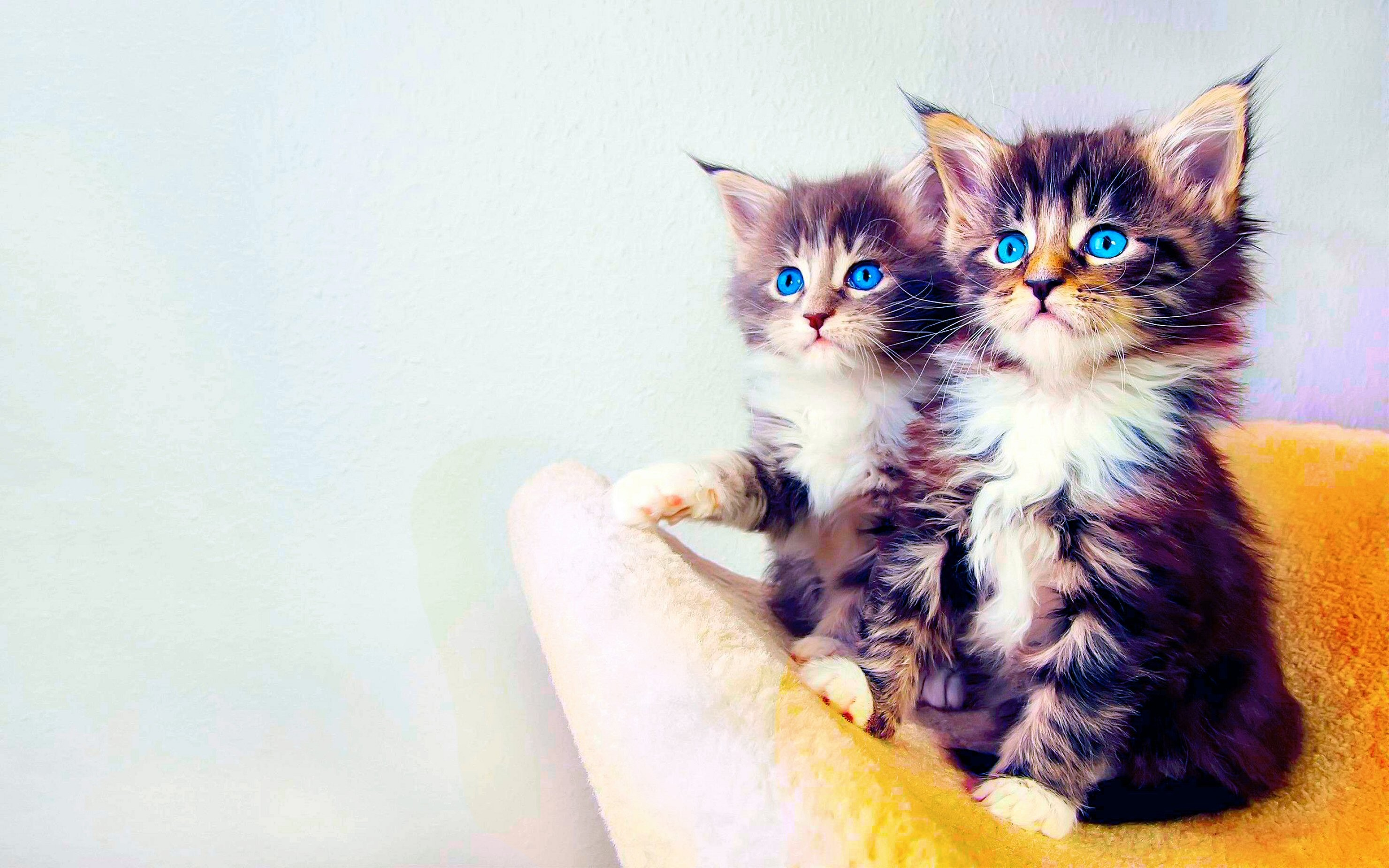 2960x1850 Kitten Wallpaper For Iphone 5s Download Gorgerous