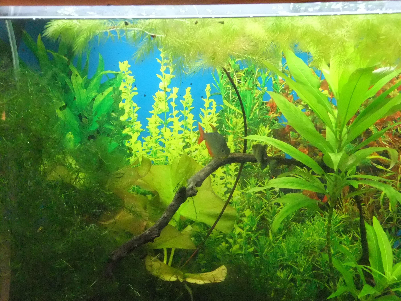 Aquarium background ·① Download free wallpapers for ...  Printable Aquarium Background