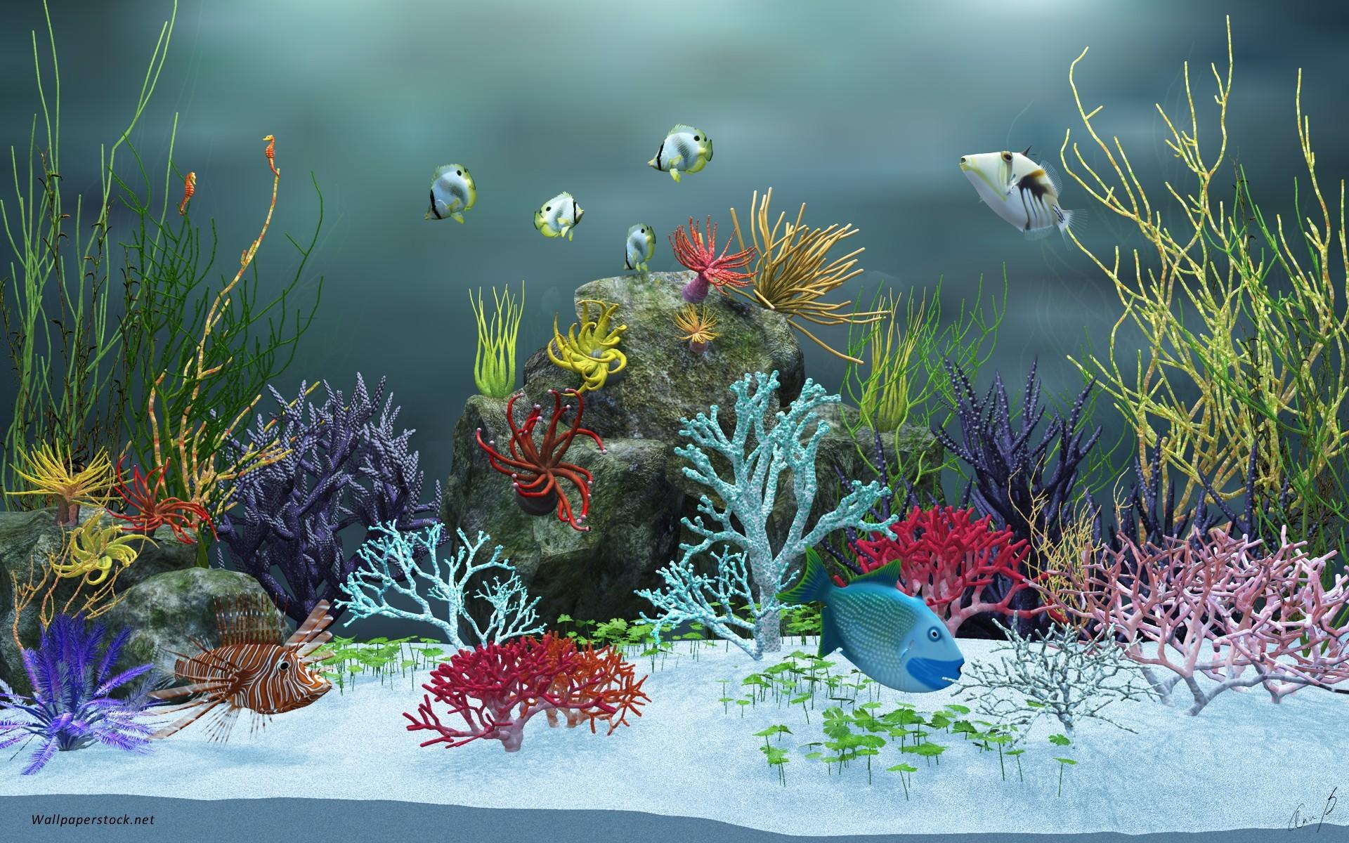 Скачать обои на рабочий стол аквариум бесплатно и без регистрации