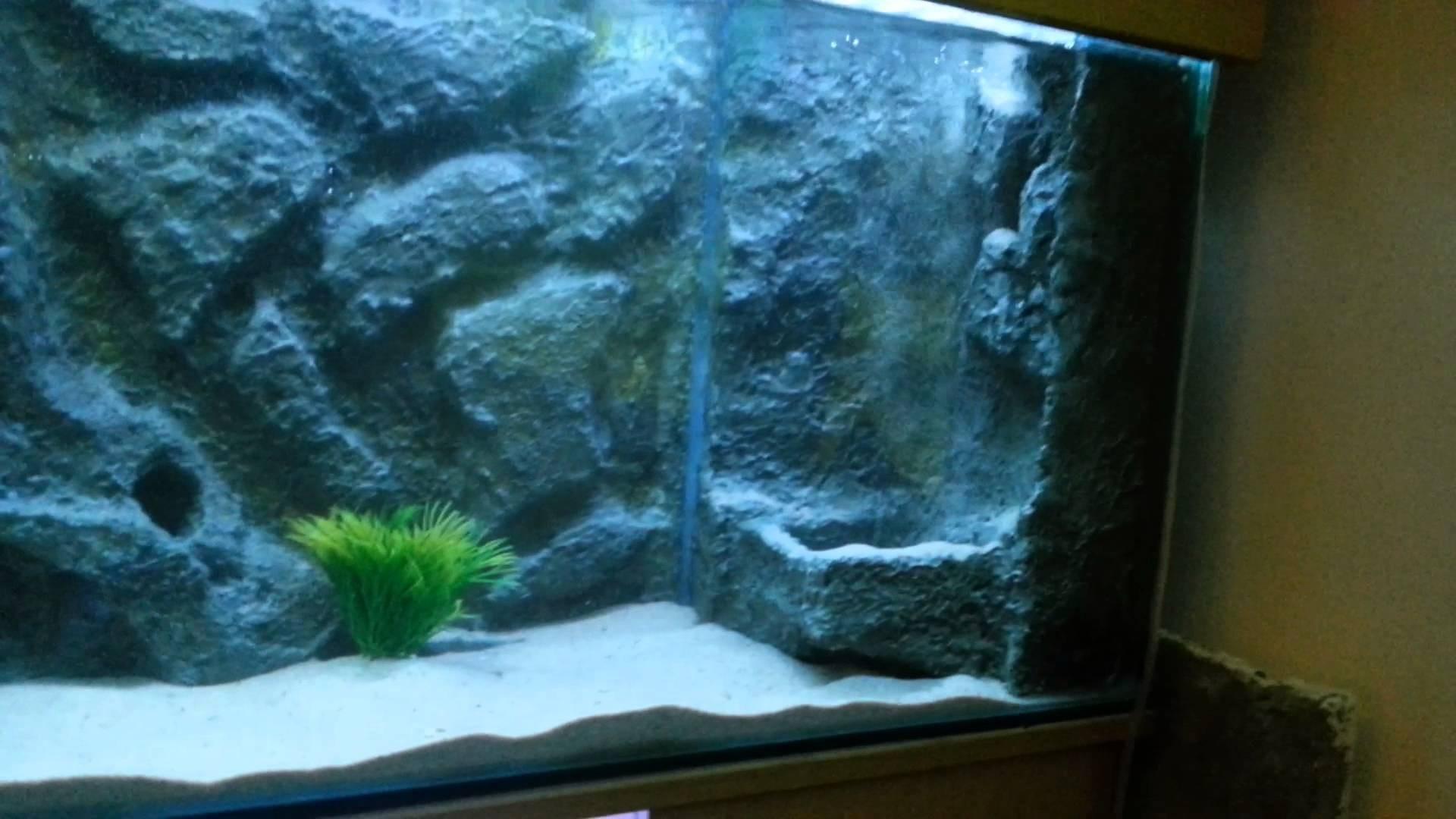 aquarium background  u00b7 u2460 download free wallpapers for