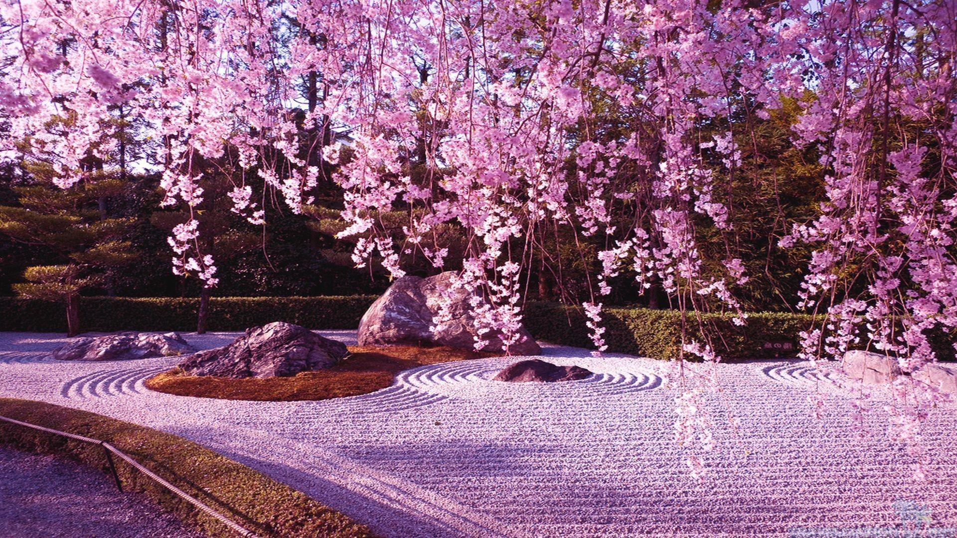 Sakura wallpaper ·① Download free stunning wallpapers for desktop