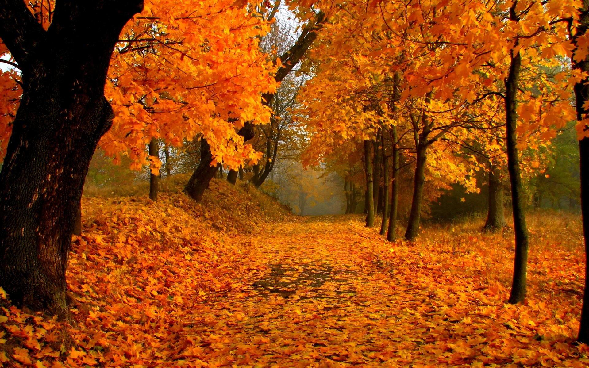 Fall Foliage Wallpaper ·① WallpaperTag