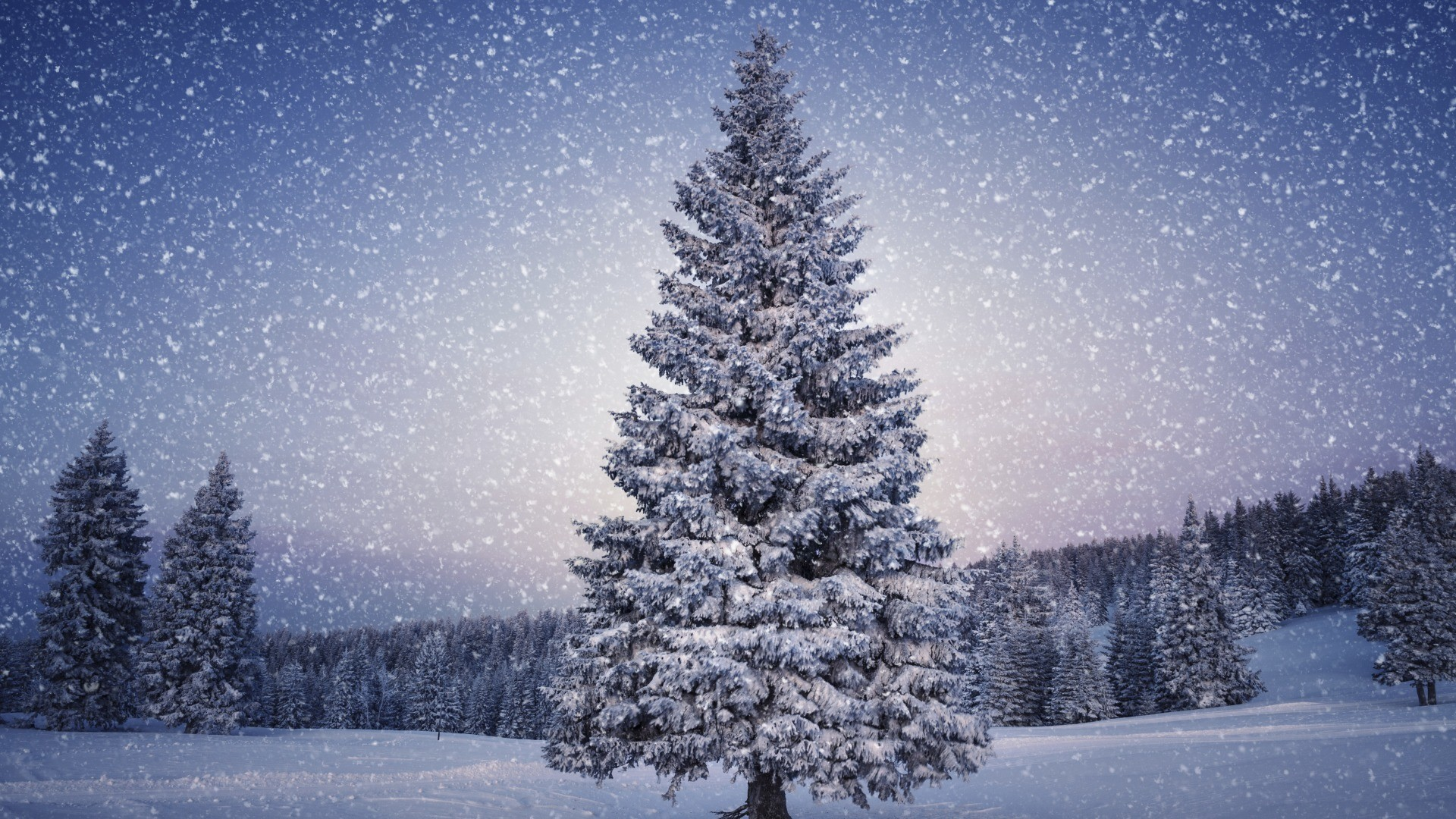 Winter Snow Scenes Wallpaper 1