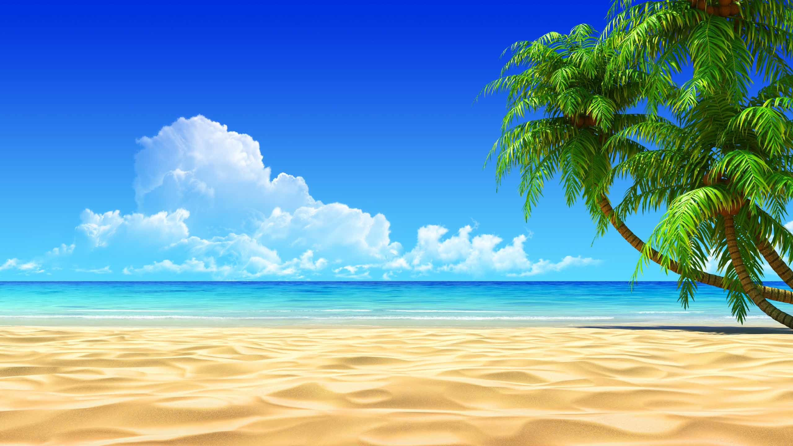 tropical beach wallpaper desktop ·①