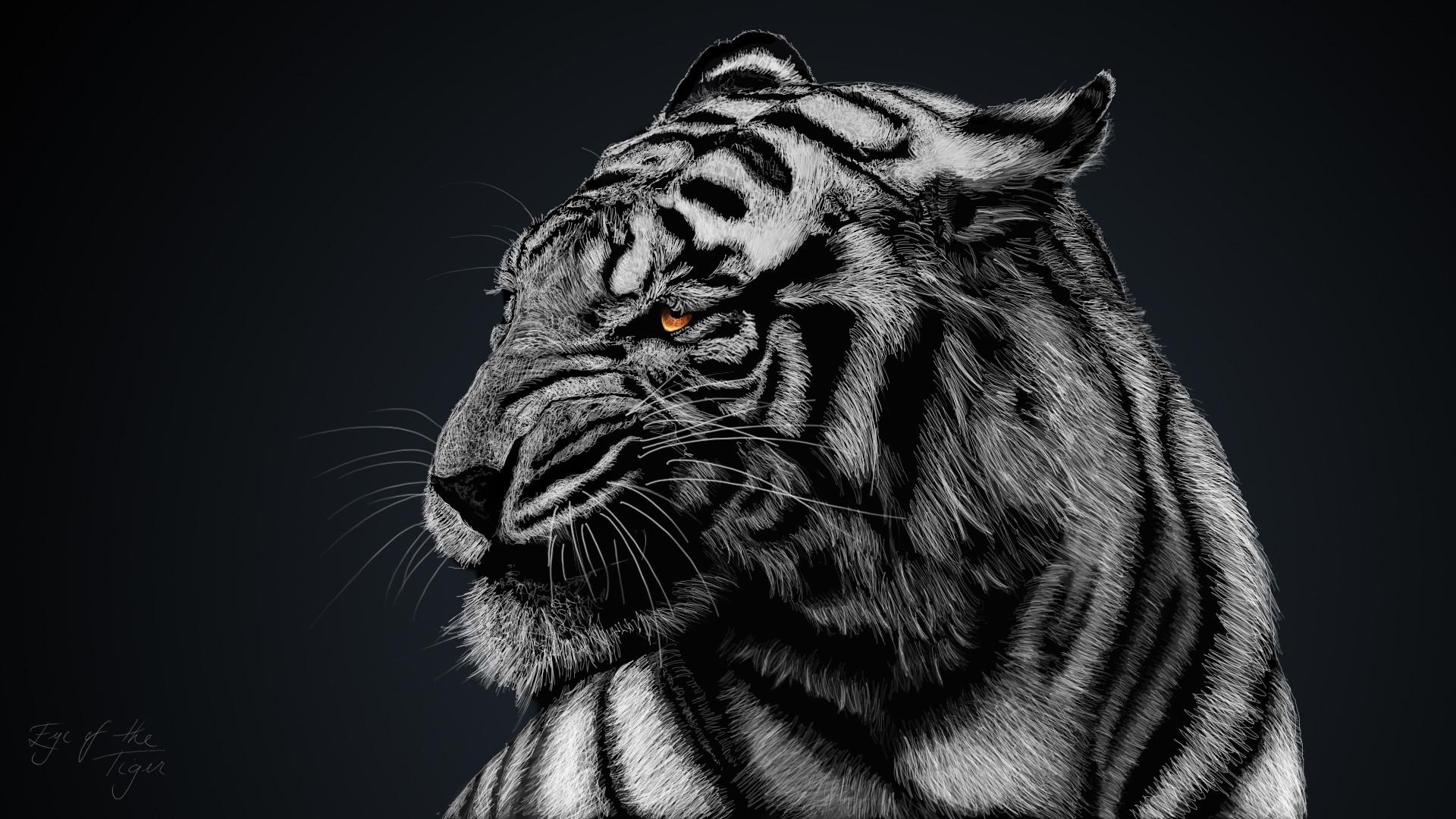 8k Animal Wallpaper Download: Cool Tiger Wallpapers ·① WallpaperTag