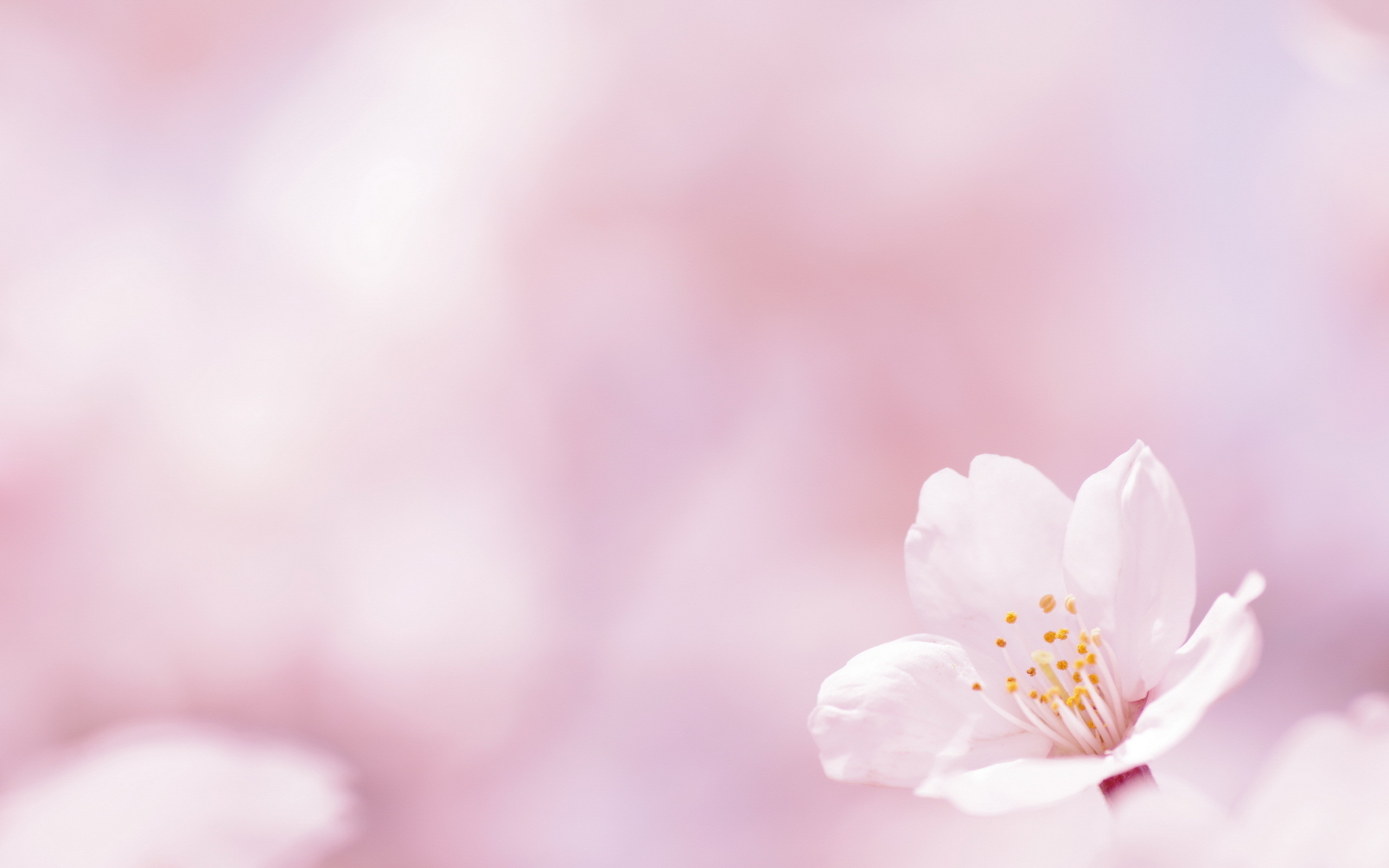 pink flower wallpapers ·①