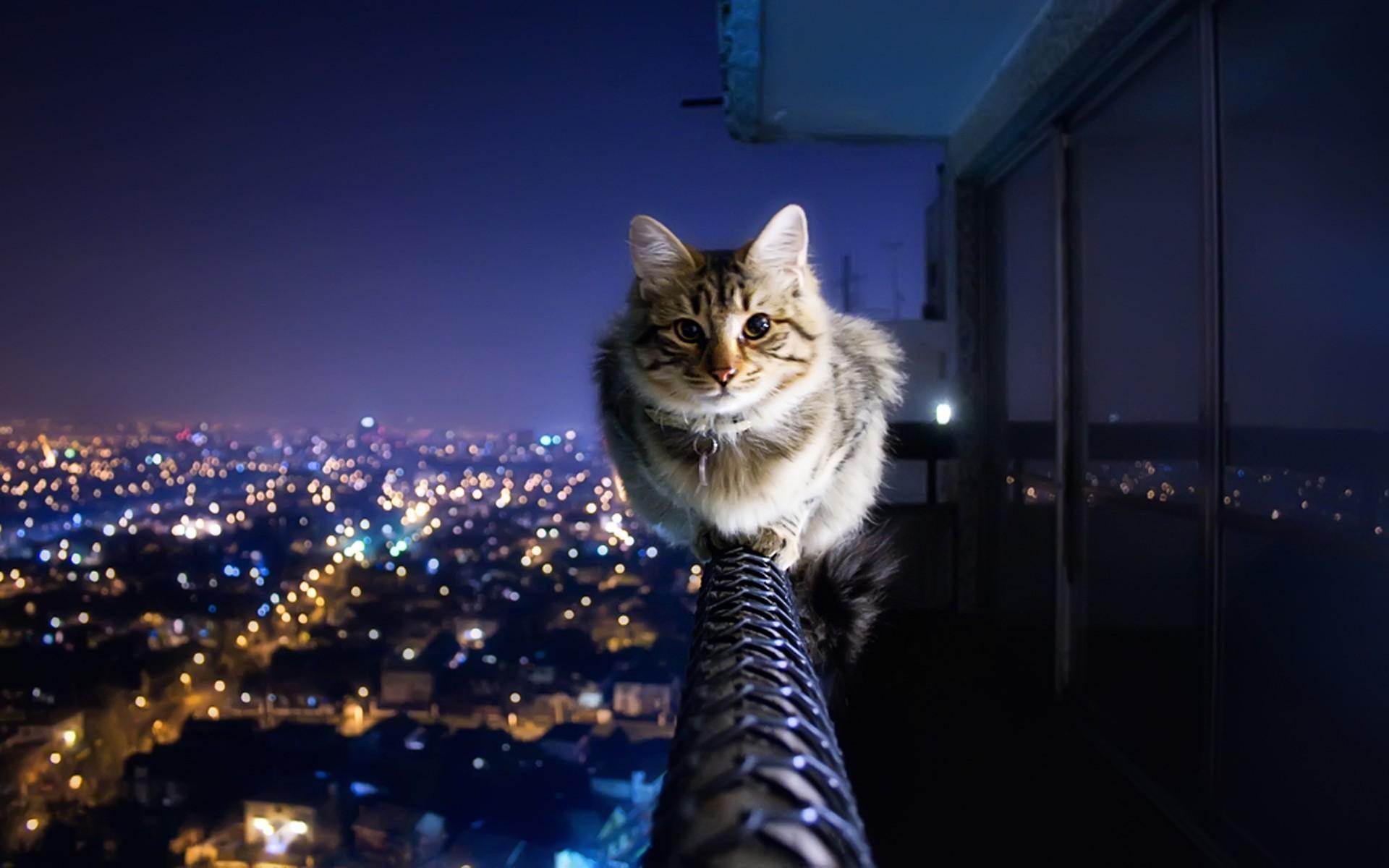 Top Wallpaper Macbook Cat - 353031-best-cat-background-1920x1200-1080p  HD_895677.jpg