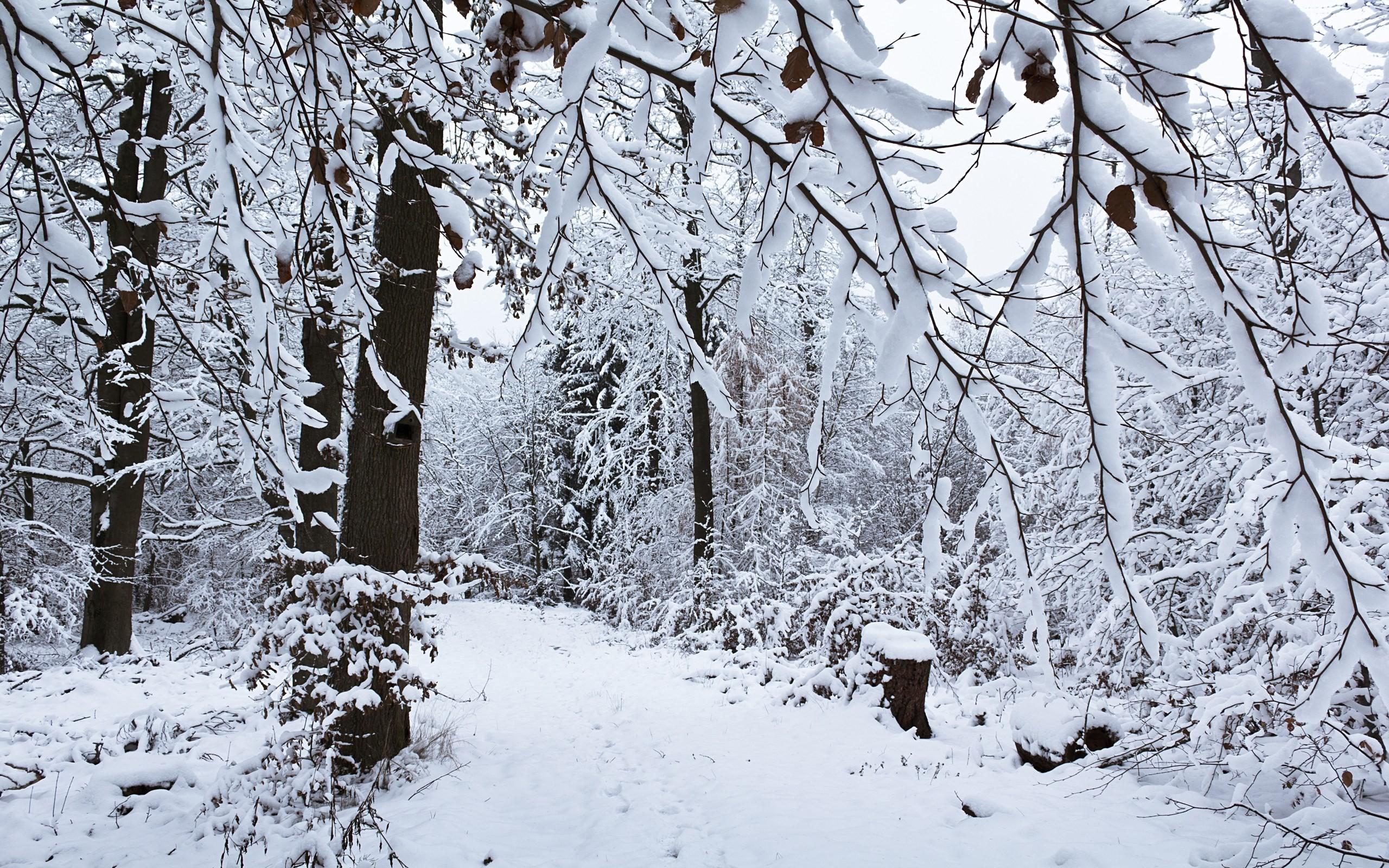 снег ветви лес snow branches forest  № 442809  скачать