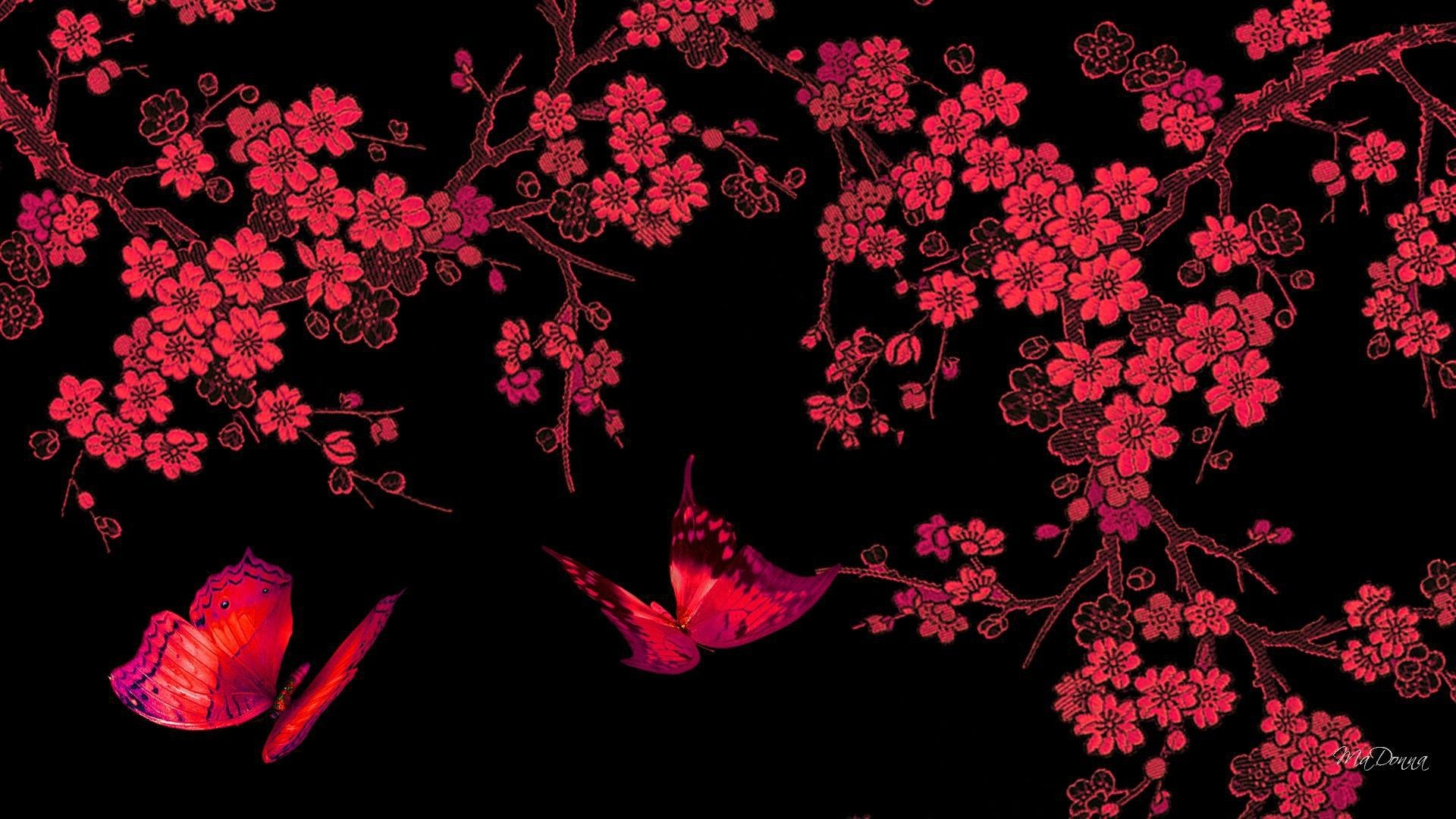 1920x1080 Red Butterfly Hd Black Background Download 2560x1600
