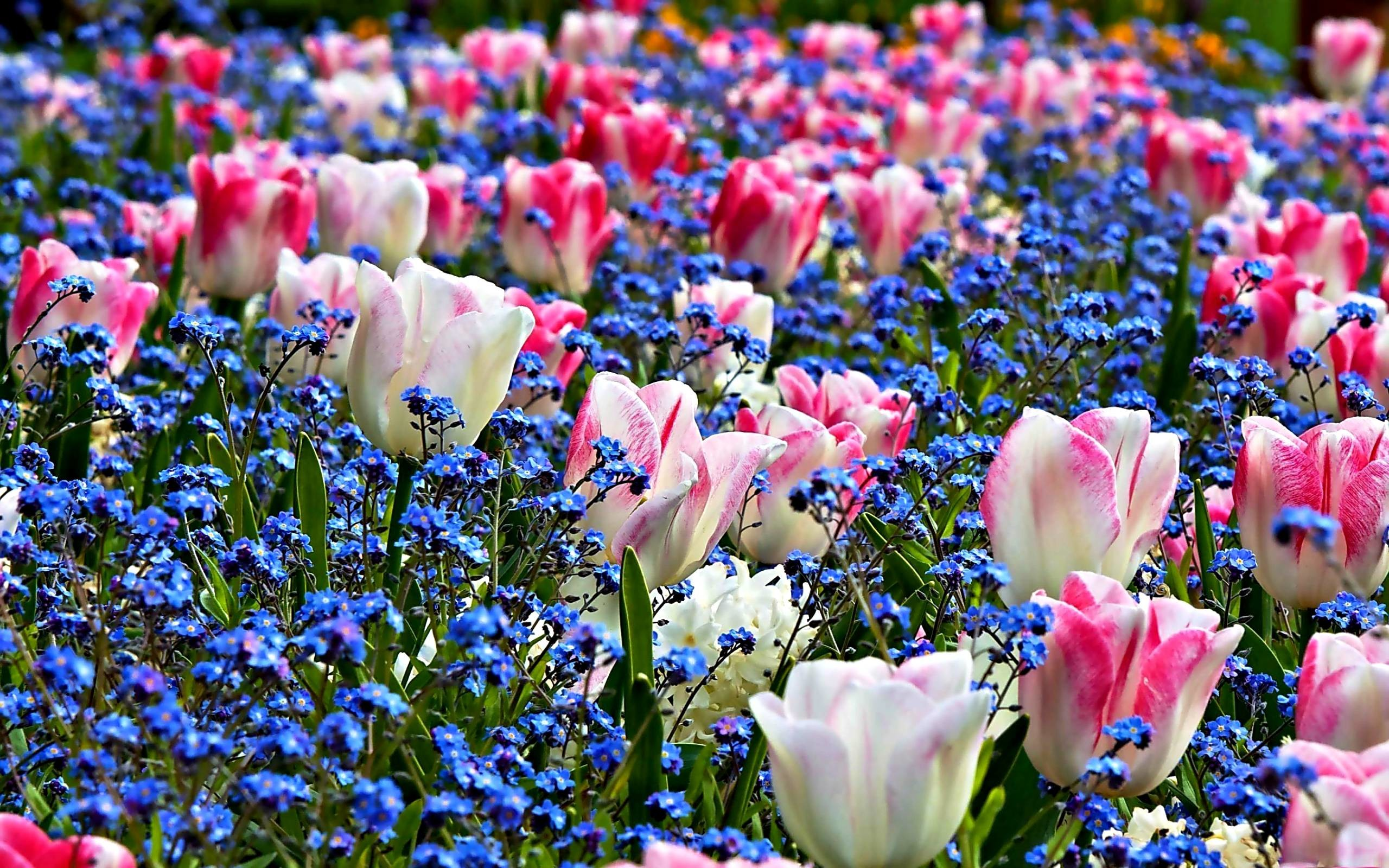 Desktop wallpaper spring flowers 2560x1600 spring flowers images desktop wallpaper timedoll download free mightylinksfo