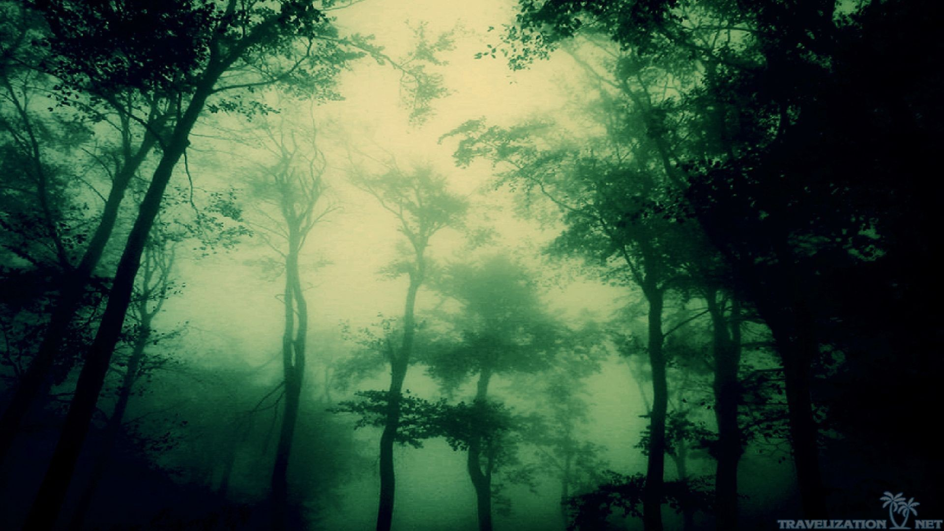 dark forest wallpapers 183��