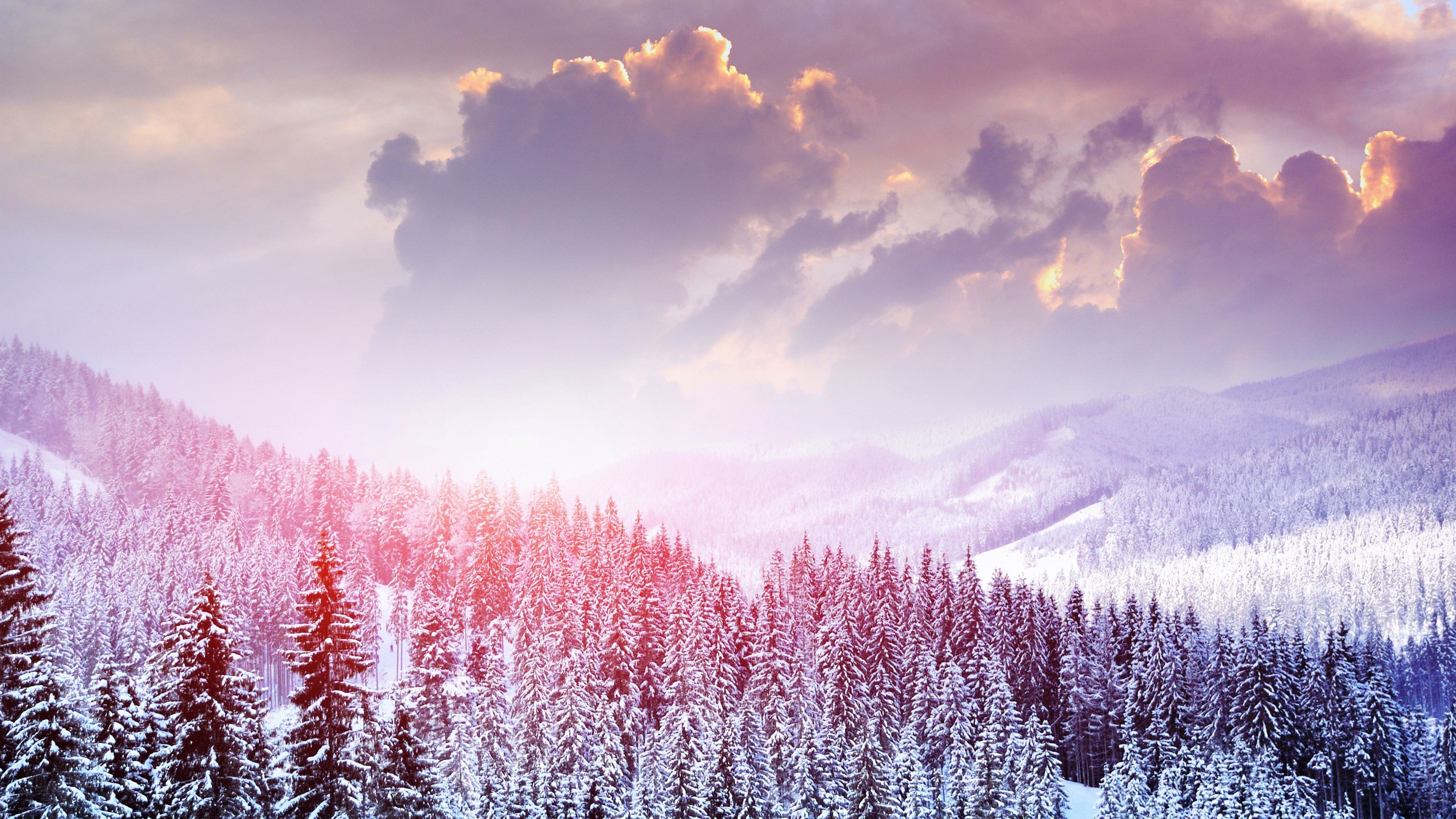 snow forest wallpaper 183��