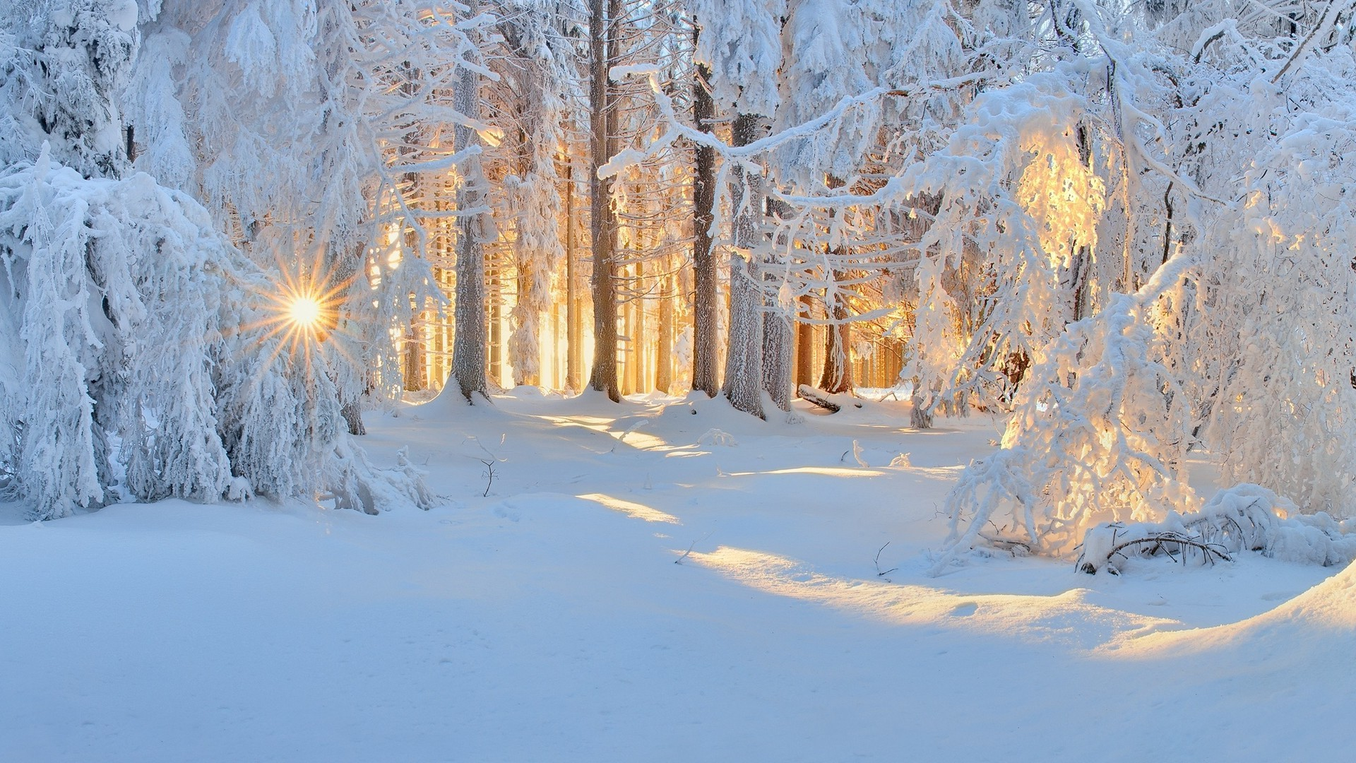 winter nature wallpapers 183��