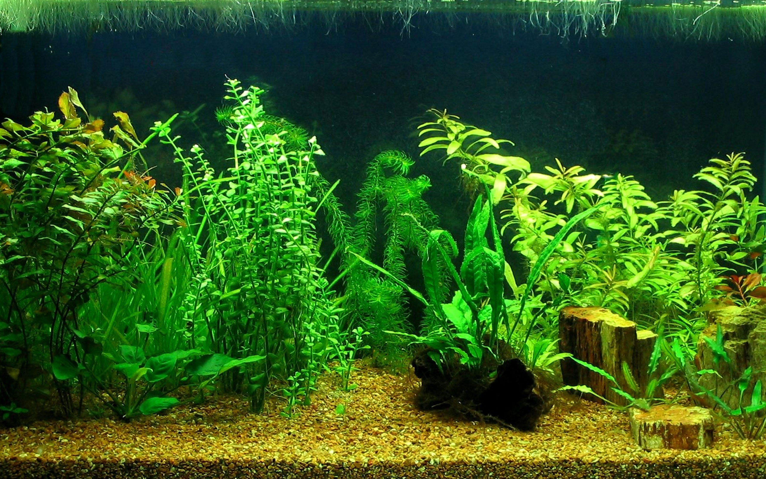 aquarium hd wallpaper - photo #30