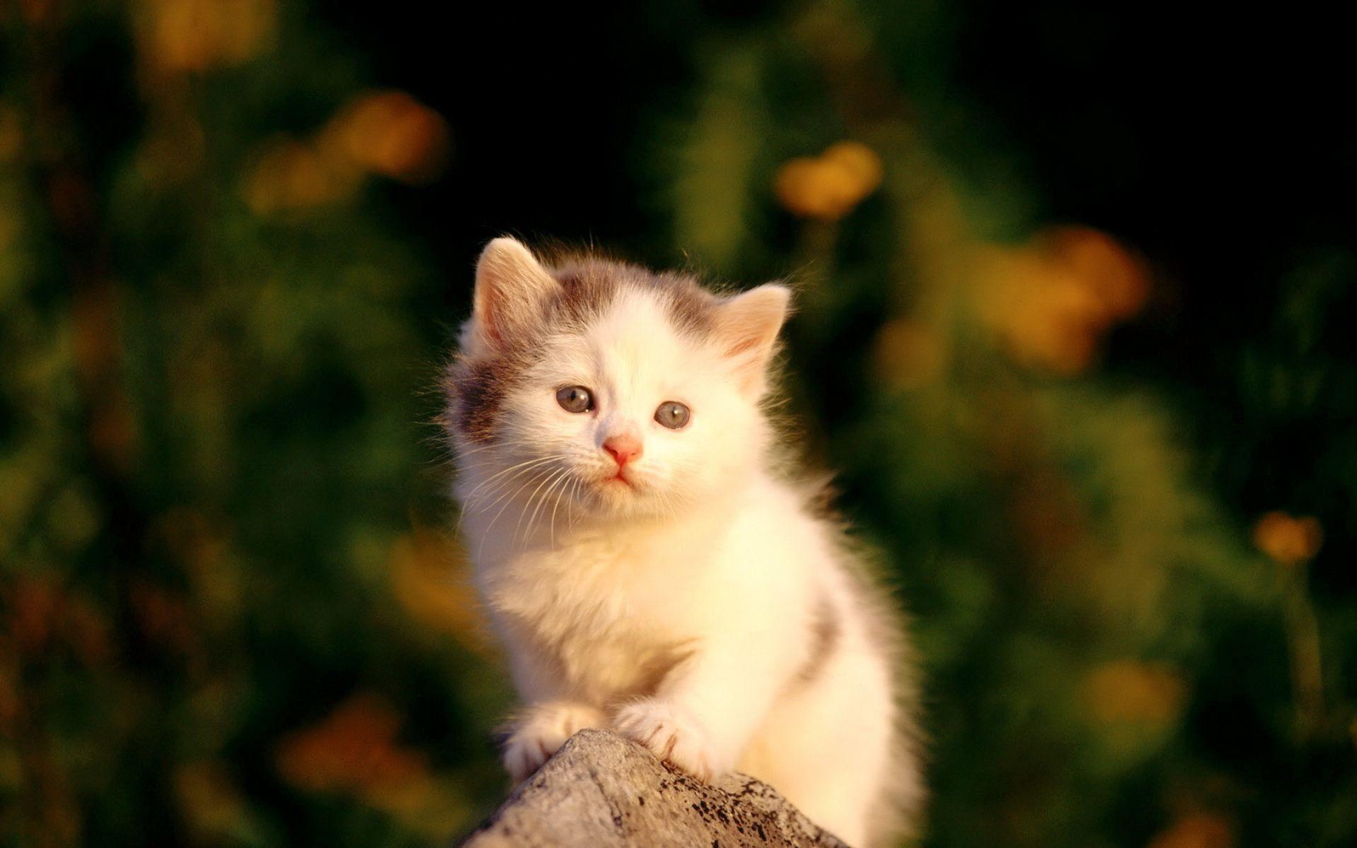baby kitten wallpaper 183��