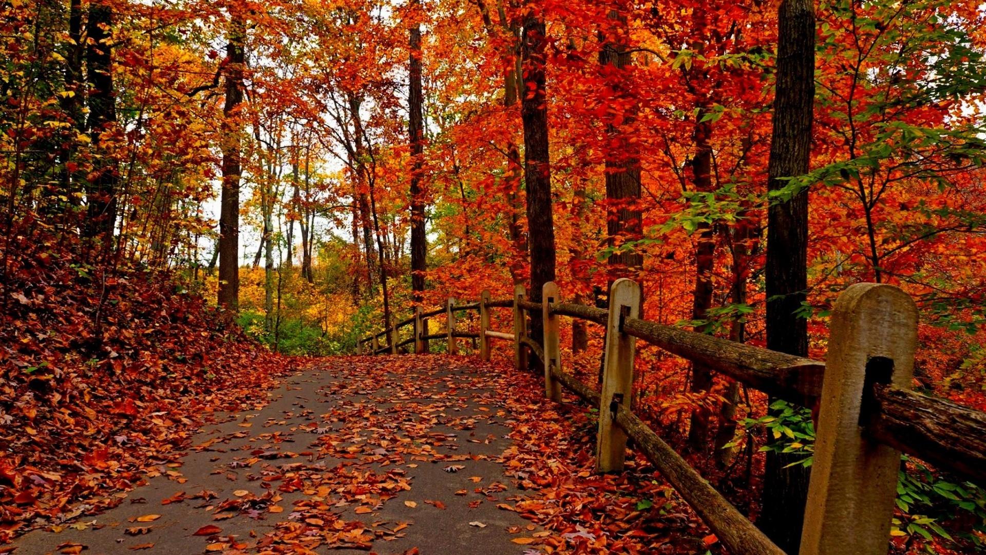 Beautiful Autumn Wallpaper ·① WallpaperTag
