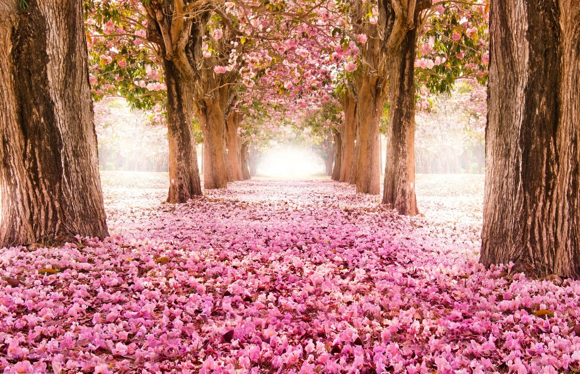 Nature Pink Road Wallpapers Hd Desktop And Mobile: Pink Nature Wallpaper ·① WallpaperTag