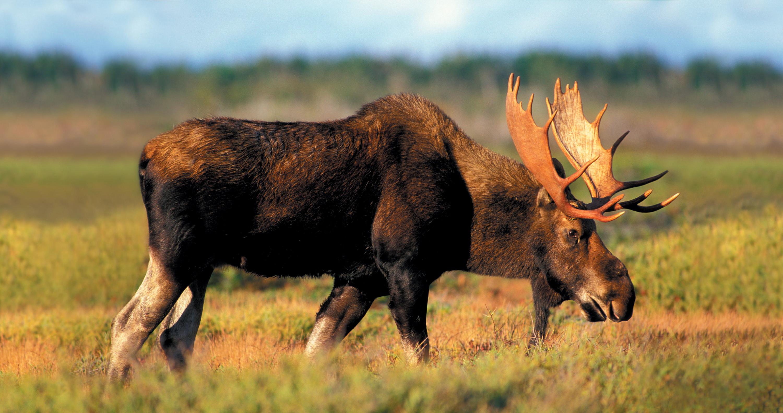декор, плафоны животные татарстана фото с названиями страна единственная, которая