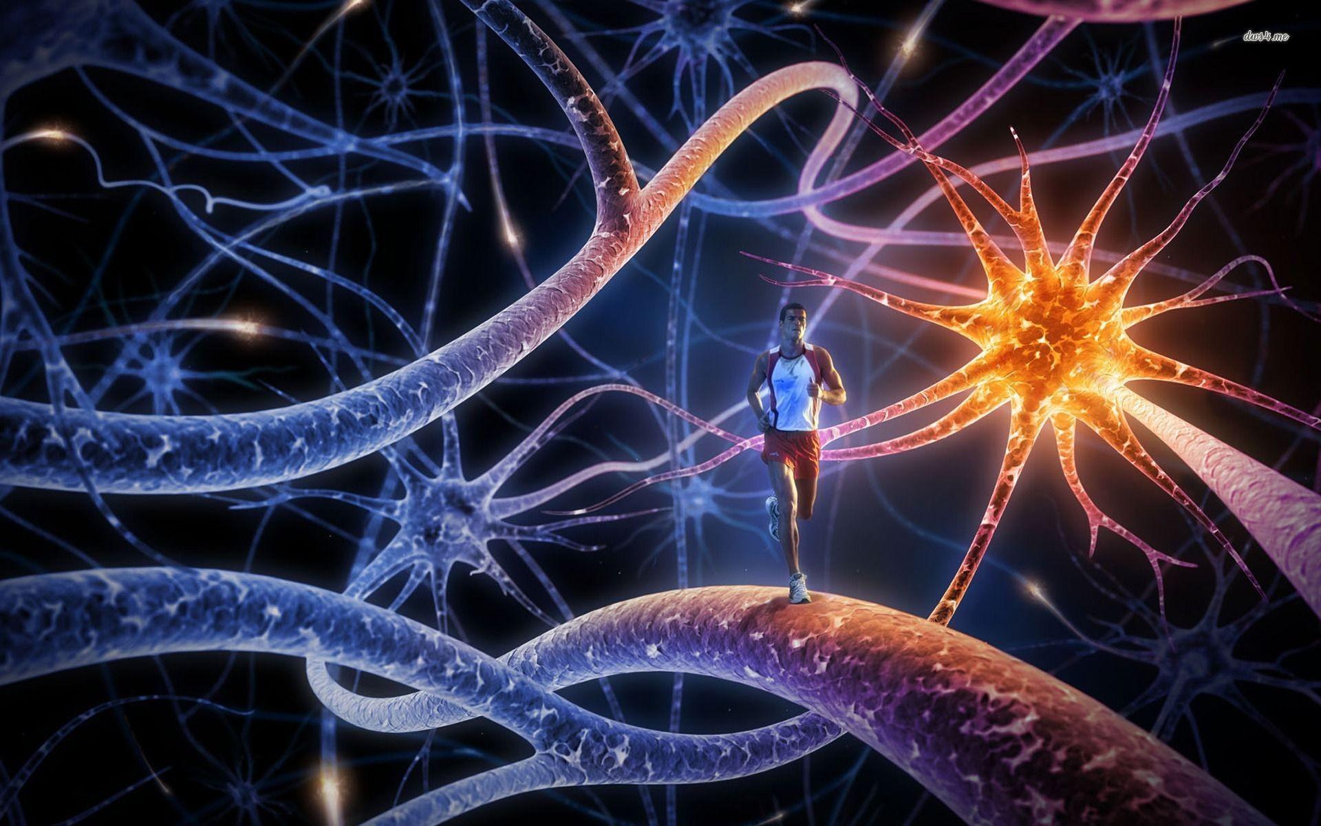 neuron wallpapers 183��