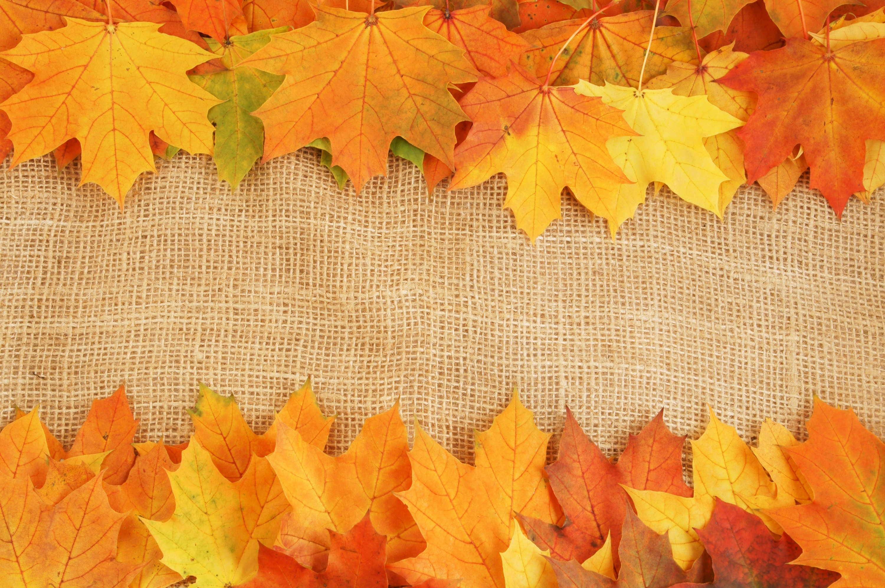 autumn leaves background 183�� download free awesome high