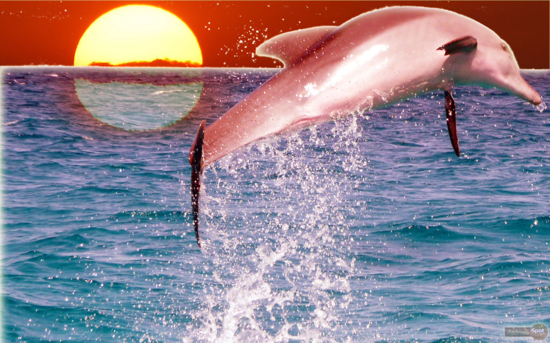 морская обои на рабочий стол океан дельфины способен