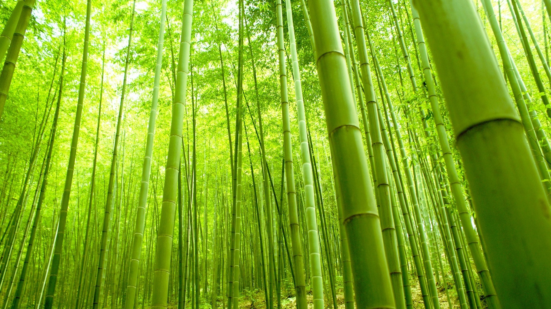 Bamboo wallpaper ·① Download free amazing wallpapers for ...