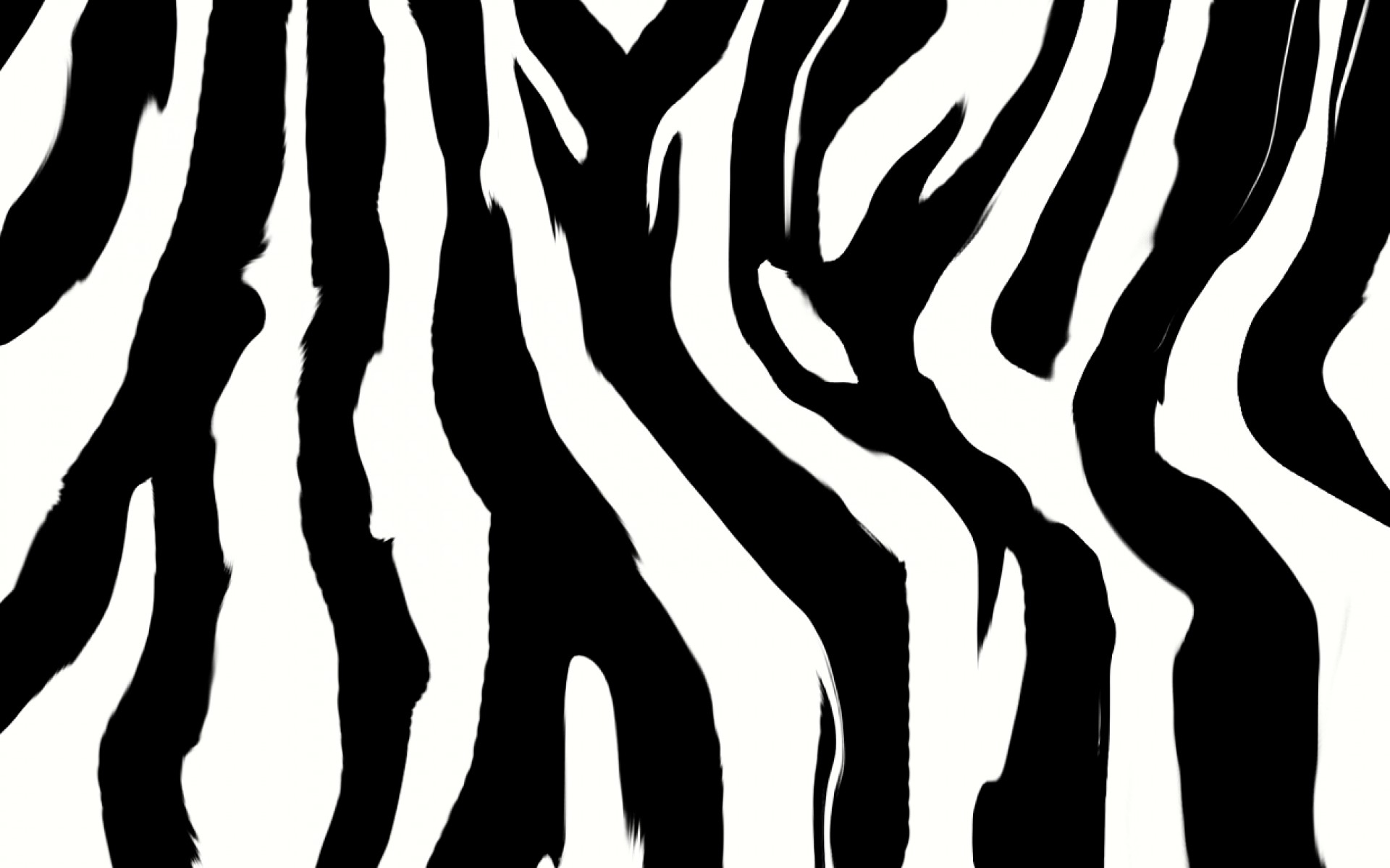 Zebra background Download free stunning HD wallpapers for