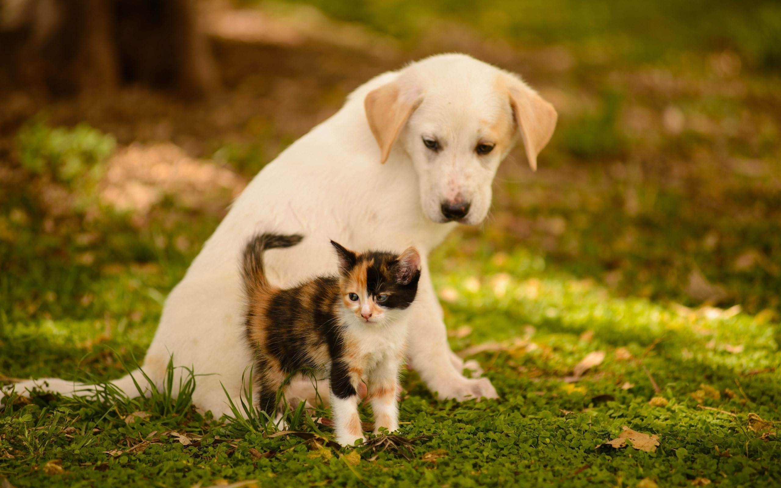 Dogs And Puppies Wallpaper Puppies and Kittens Wa...