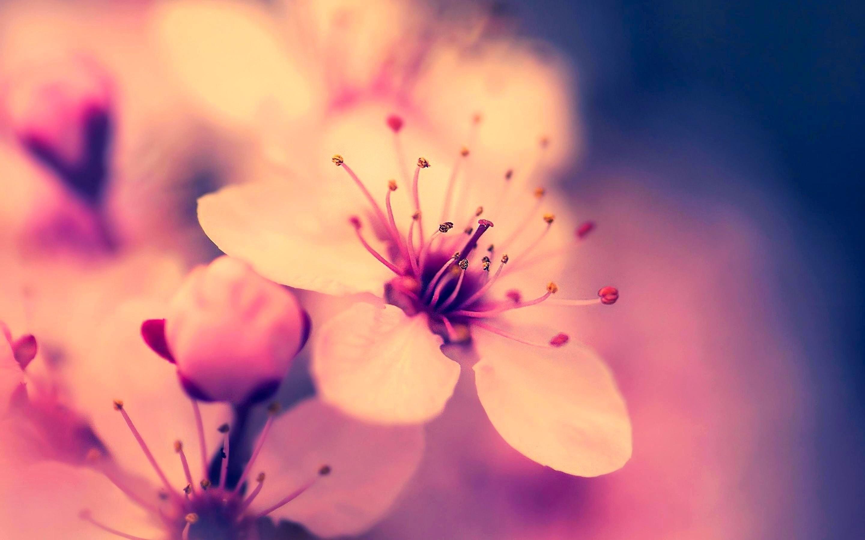 Flower HD Wallpaper ·① WallpaperTag
