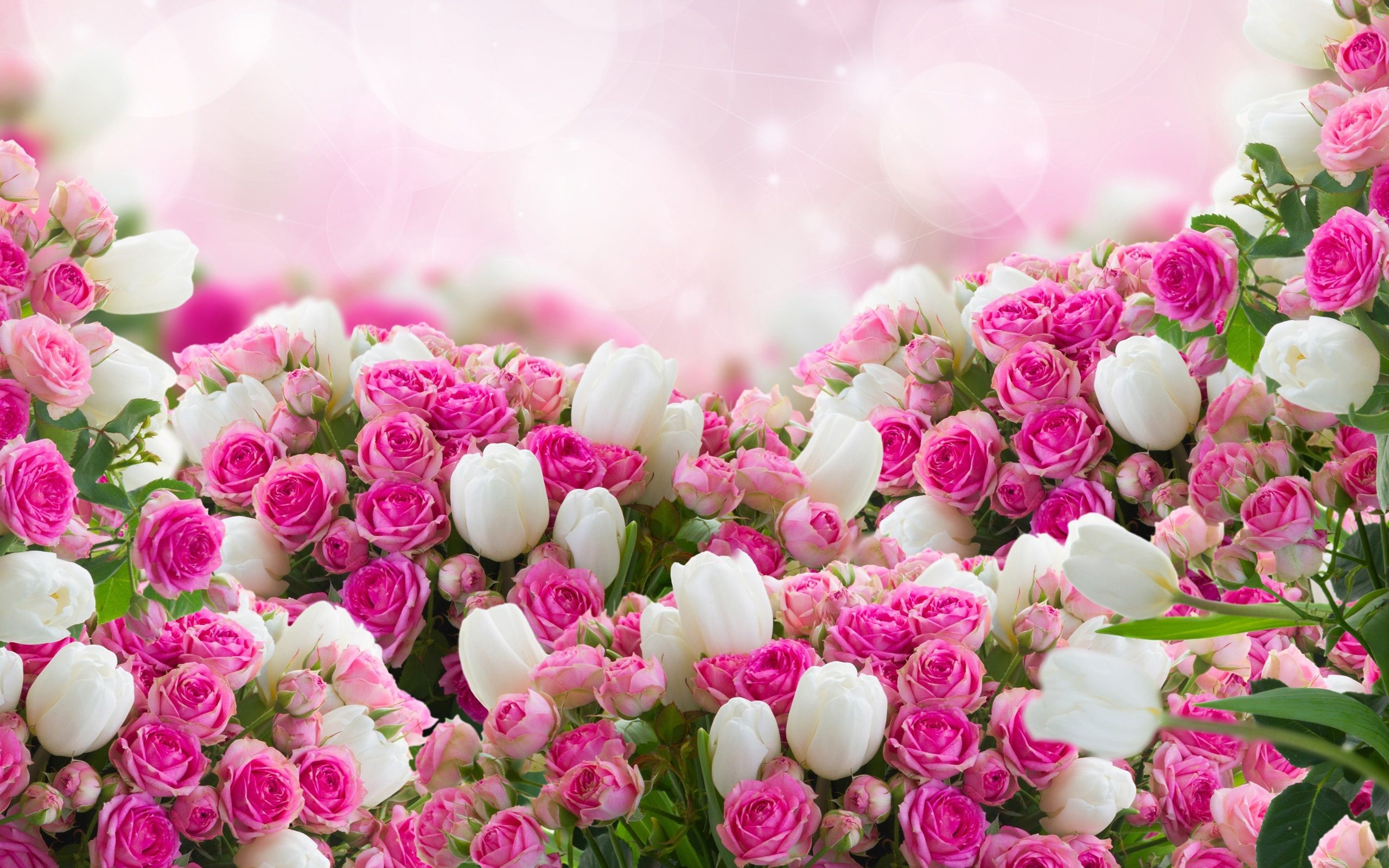 45 flowers wallpapers download free beautiful full hd pink mightylinksfo