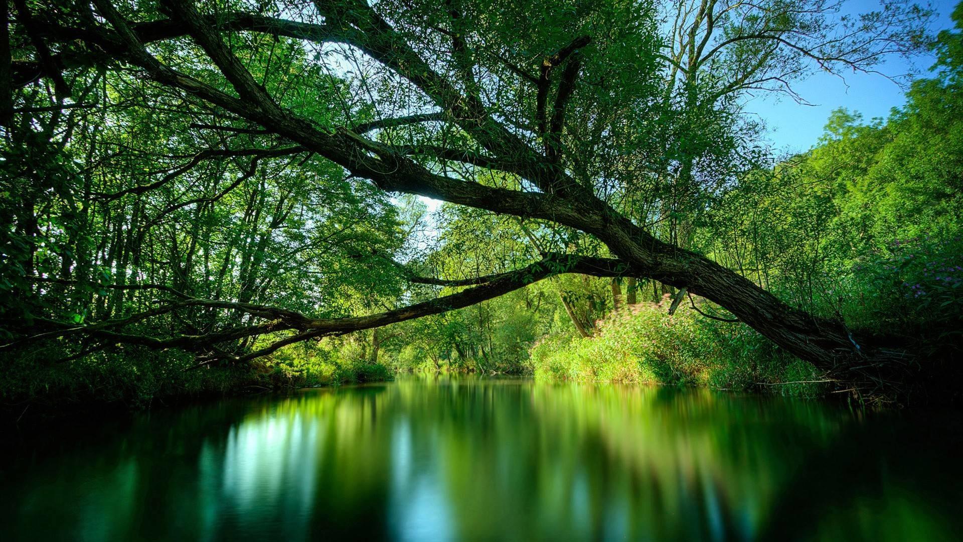 Nature desktop wallpaper beautiful nature hd wallpaper voltagebd Gallery