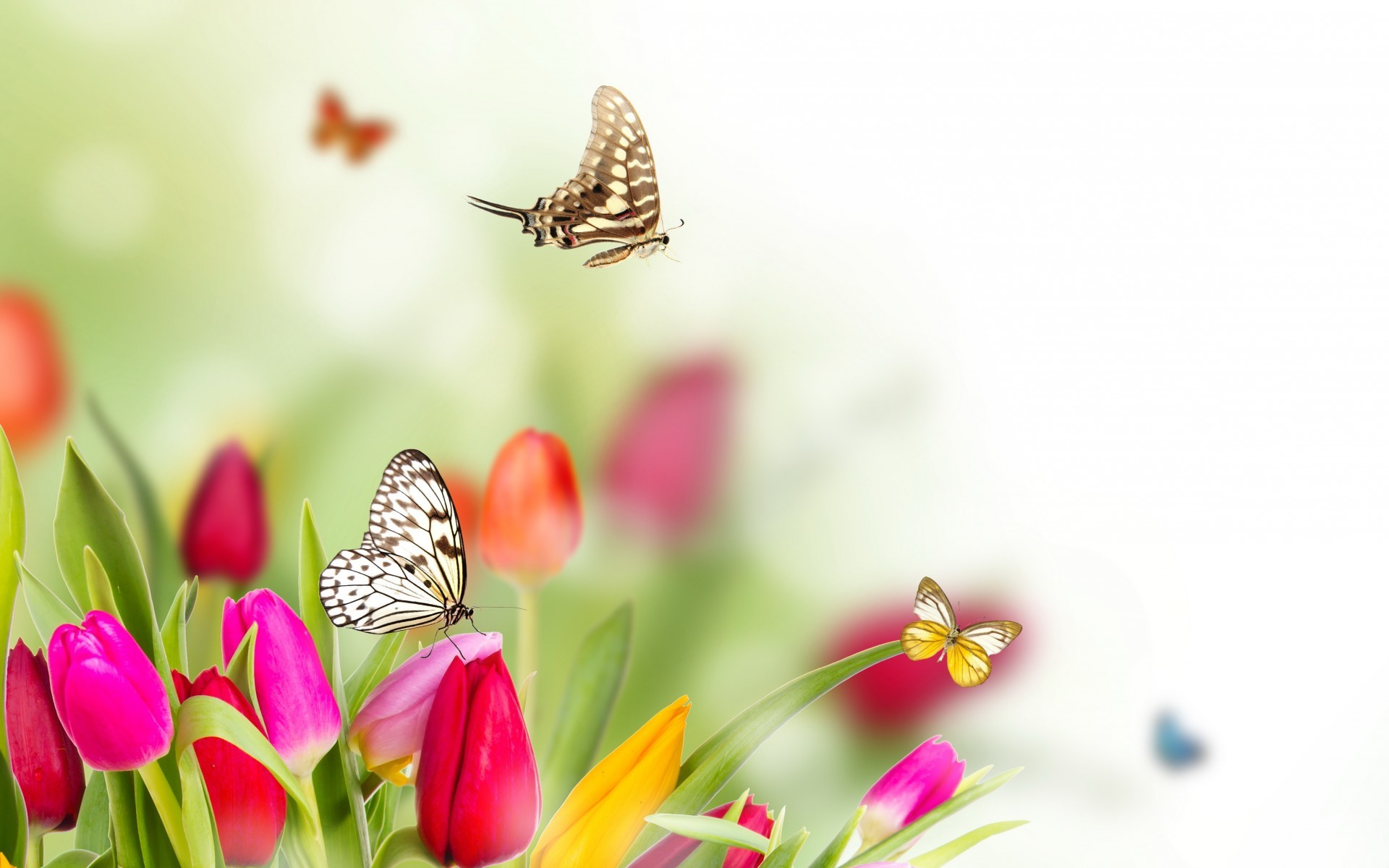 Spring Flowers Background ·① WallpaperTag