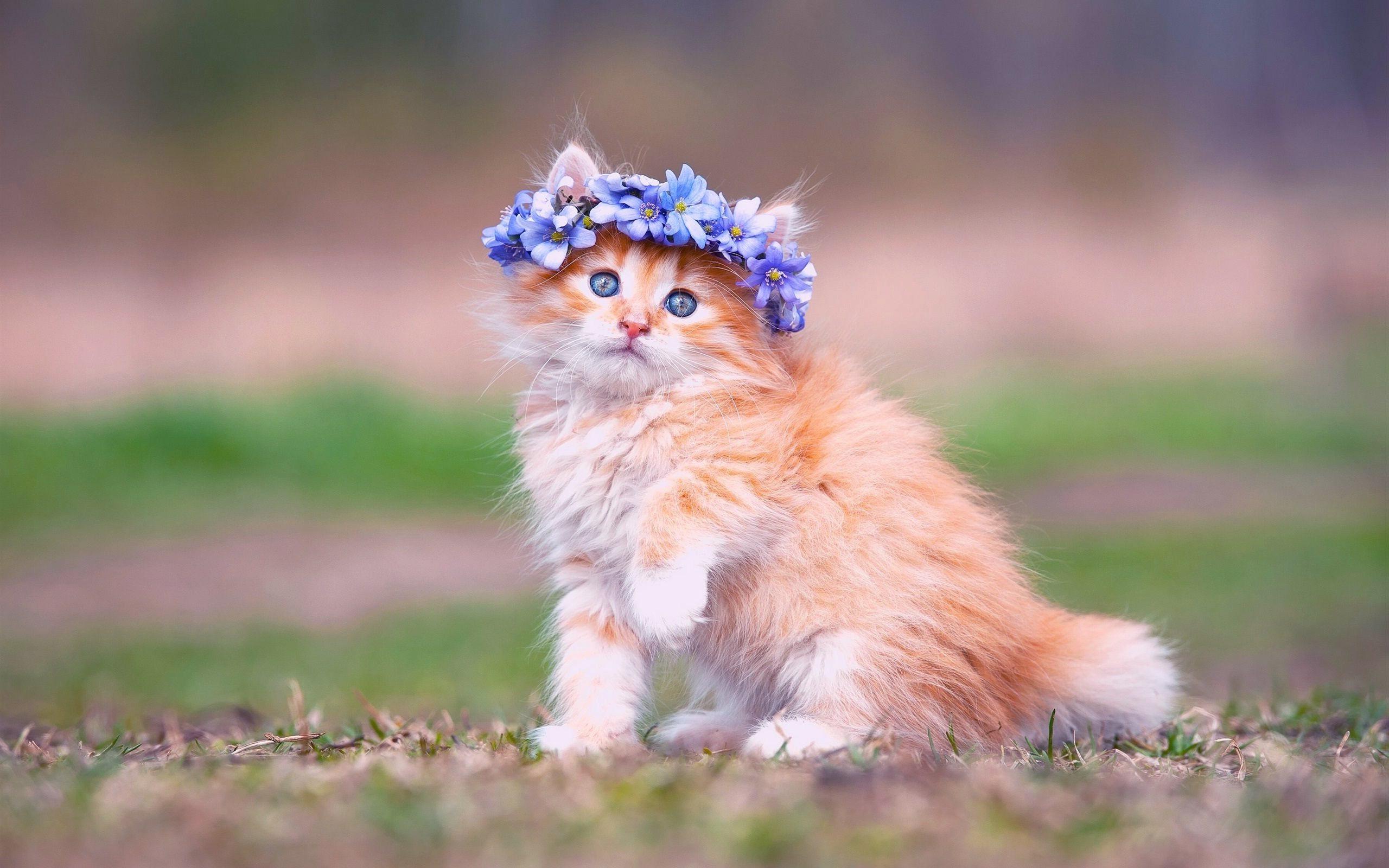 cat with sombrero